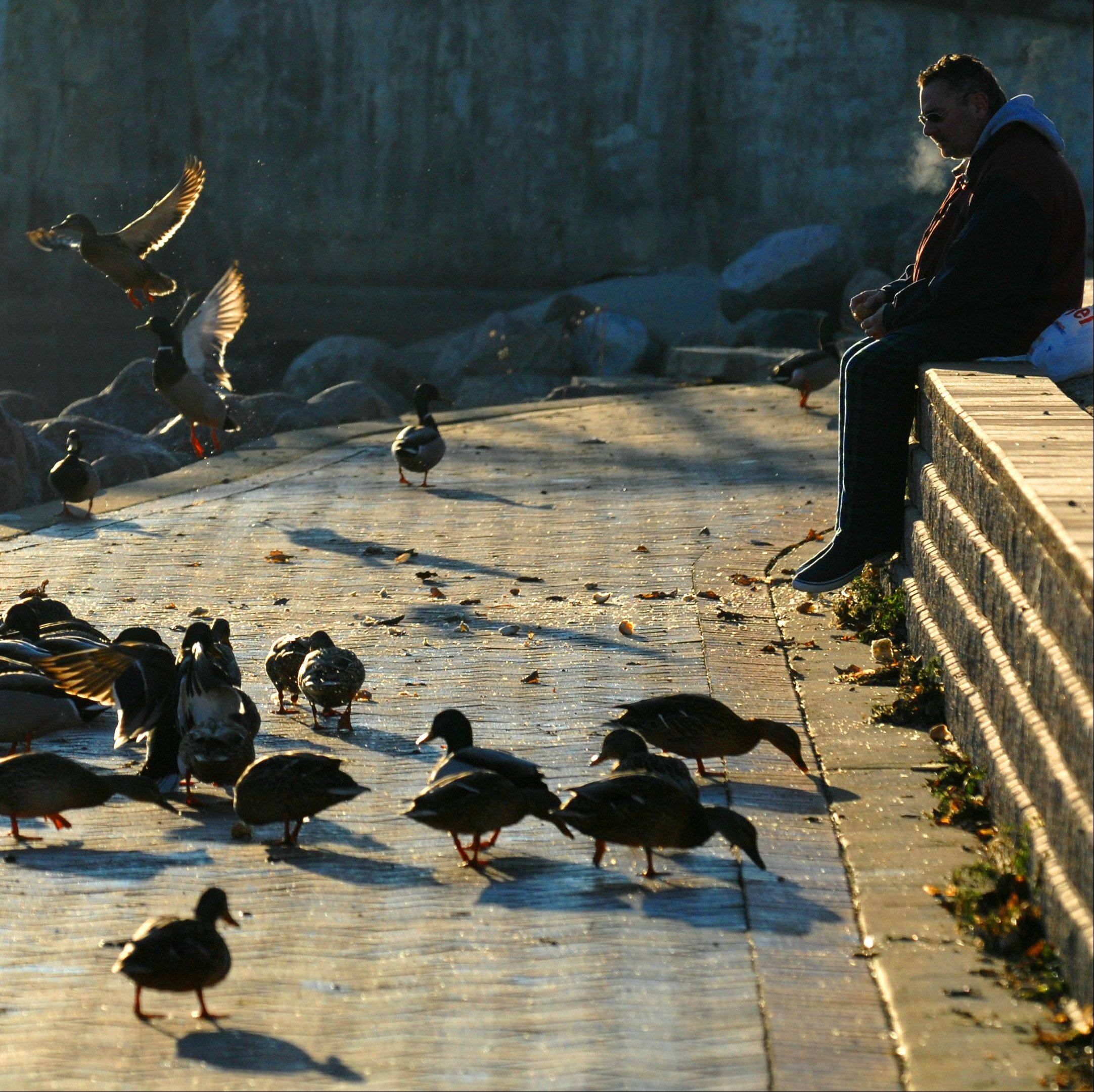 Brian Cole of St. Charles enjoys a sunny and mild Wednesday morning by feeding the ducks along the path near the shore of the Fox River in downtown St. Charles. He's been stopping by to feed them 2-3 times a week for the past six months or so as part of his daily walking routine.