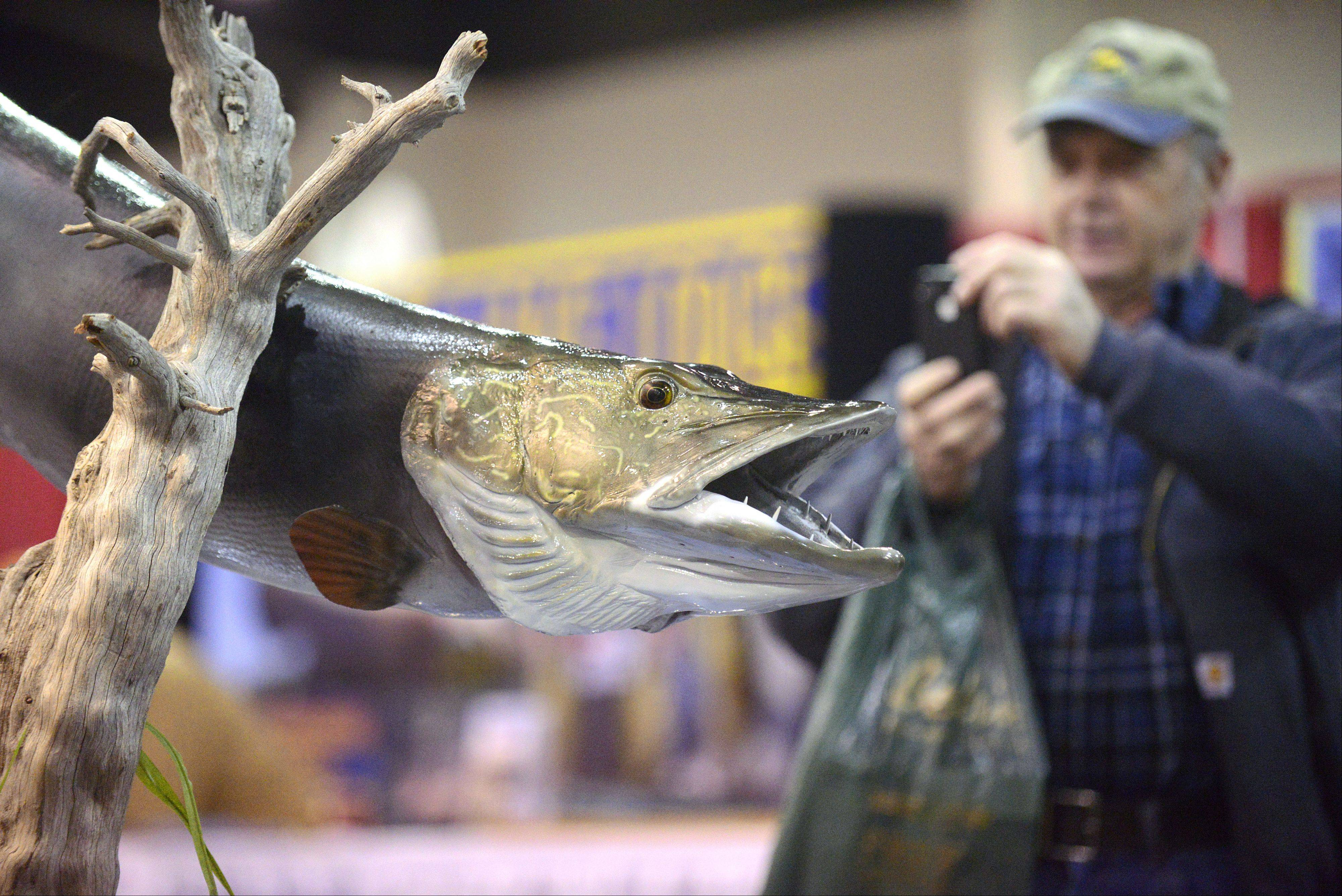 Dan Wallis of Oswego readies to take a picture of a Northern Pike at the 30th annual All-Canada Show at Pheasant Run's Mega Center in St. Charles on Saturday. Wallis and his step-son, Glen Hasenheyer of Aurora come to the show every year. Hasenheyer got his picture taken with the fish too.
