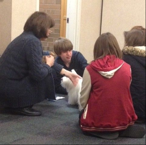 Handler Sharon Detro and her specially trained therapy dog Leila Mae, a small, white Coton de Tulear, were a huge hit with anxious teens studying Sunday at the Downers Grove Public Library.