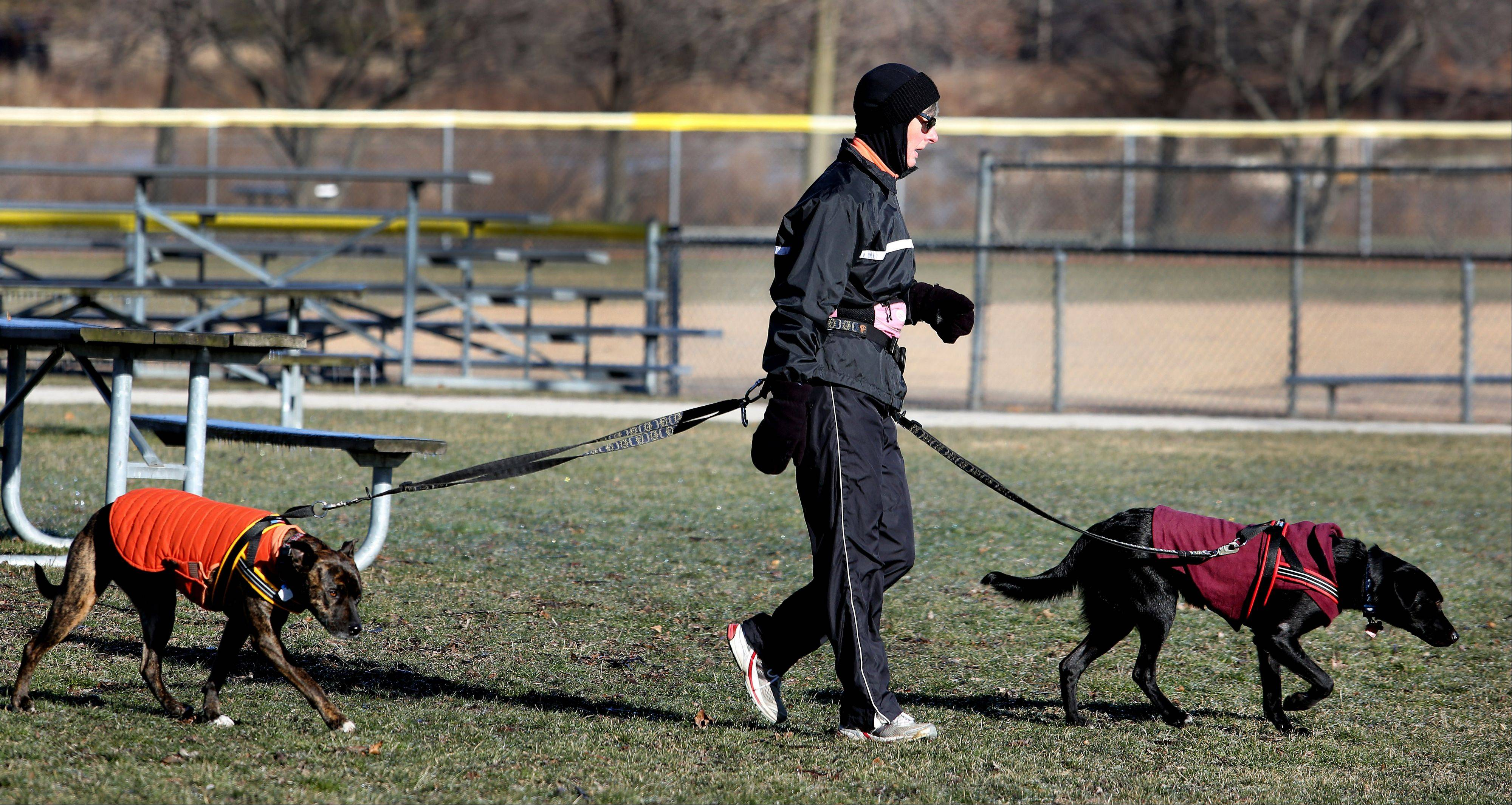 Cold weather doesn't stop Paula Brashear of Wheaton from giving her two dogs, Katrina, left, and Bear, their daily exercise at Northside Park Monday.