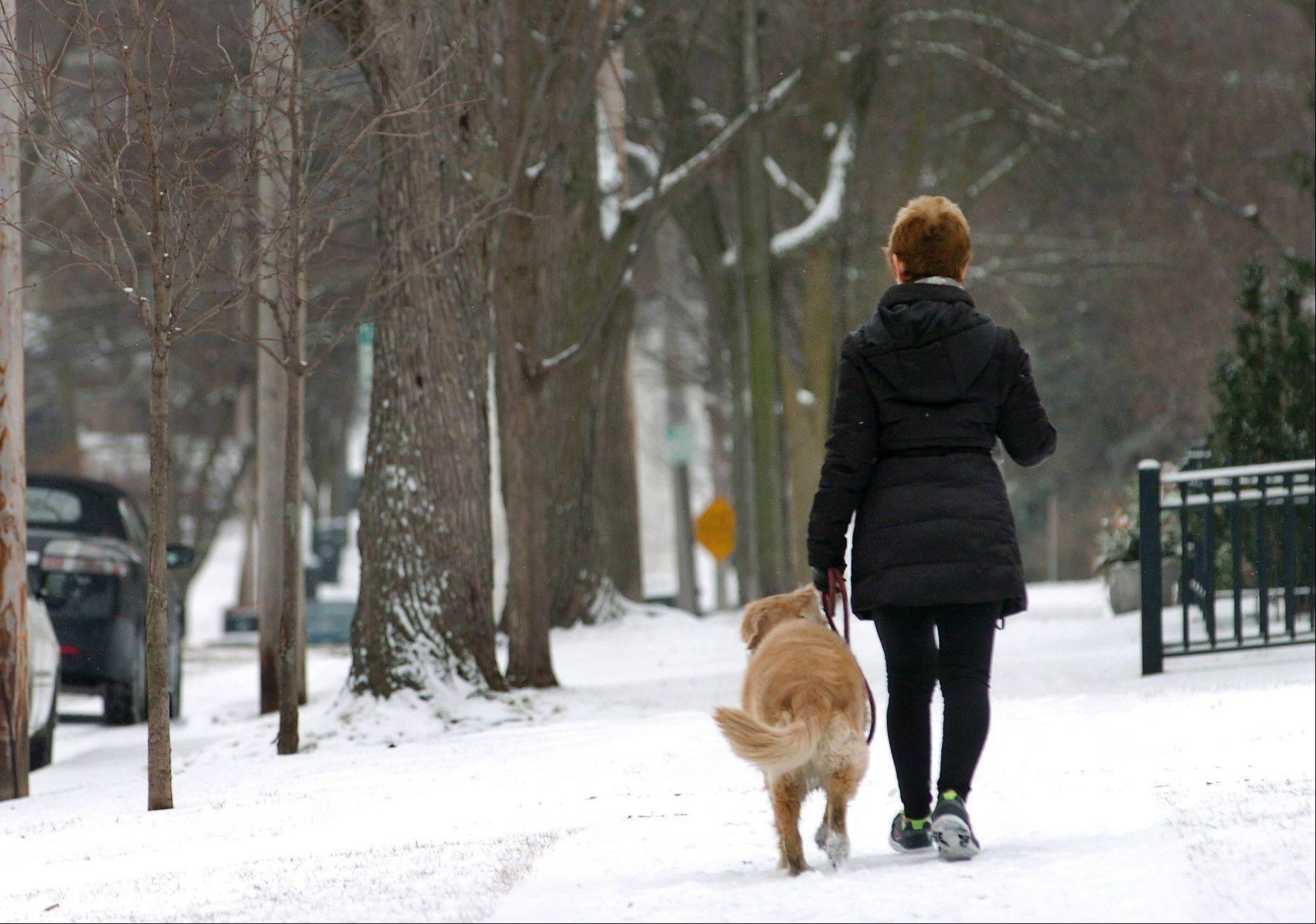 Judi Cellini walks along Cook Street in Barrington with her dog, Lily, despite the early morning snow. She walks a mile every morning while getting a cup of coffee.