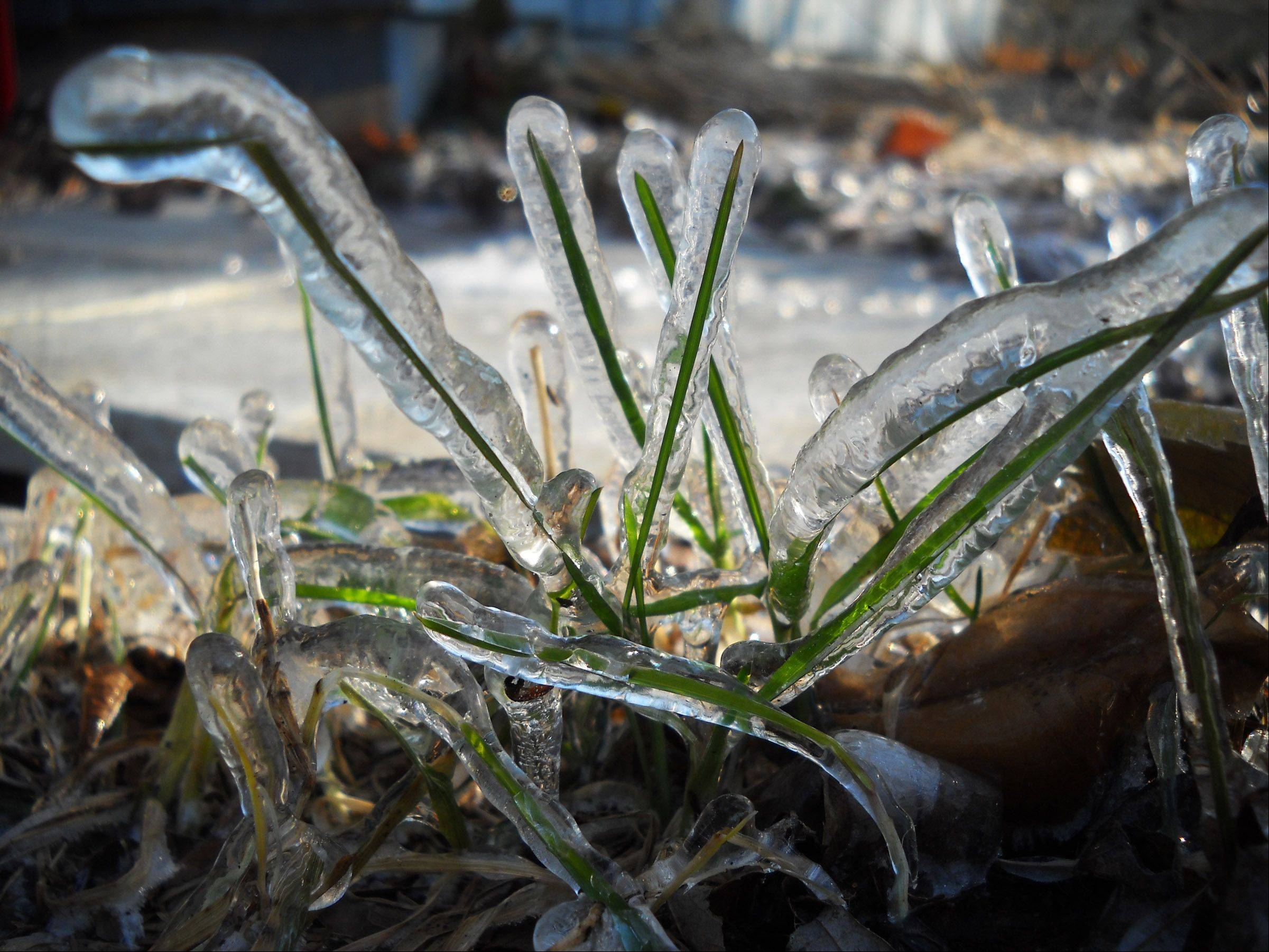 This is a photo of frozen grass by our downspout earlier this week.