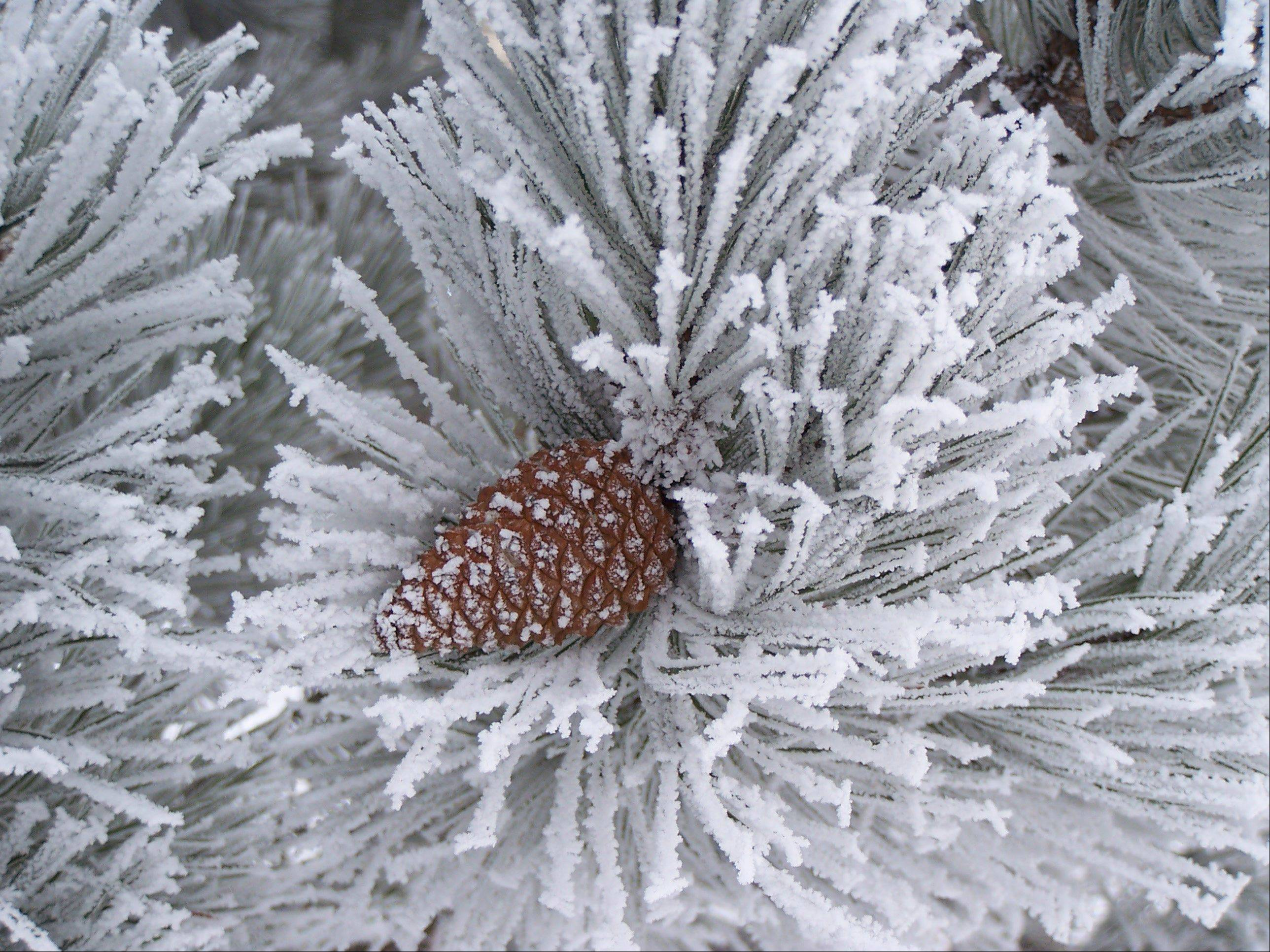 While we didn't receive a lot of snow, last winter did manage to produce a wonderful hoar frost here in Algonquin.