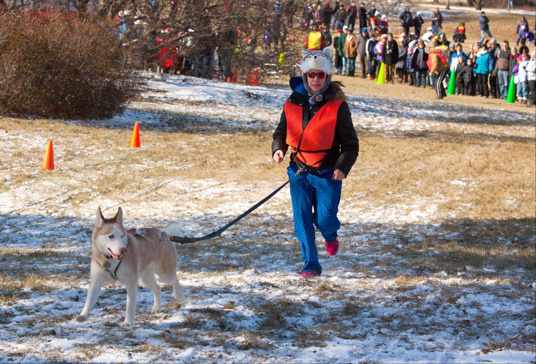 "Jen Adelman-McCarthy of Woodridge runs with a Siberian husky named Cinnamon on Saturday as the Morton Arboretum hosts the first day of its annual ""Husky Heroes"" event in Lisle. The event continues from 11 a.m. to 4 p.m. Sunday."