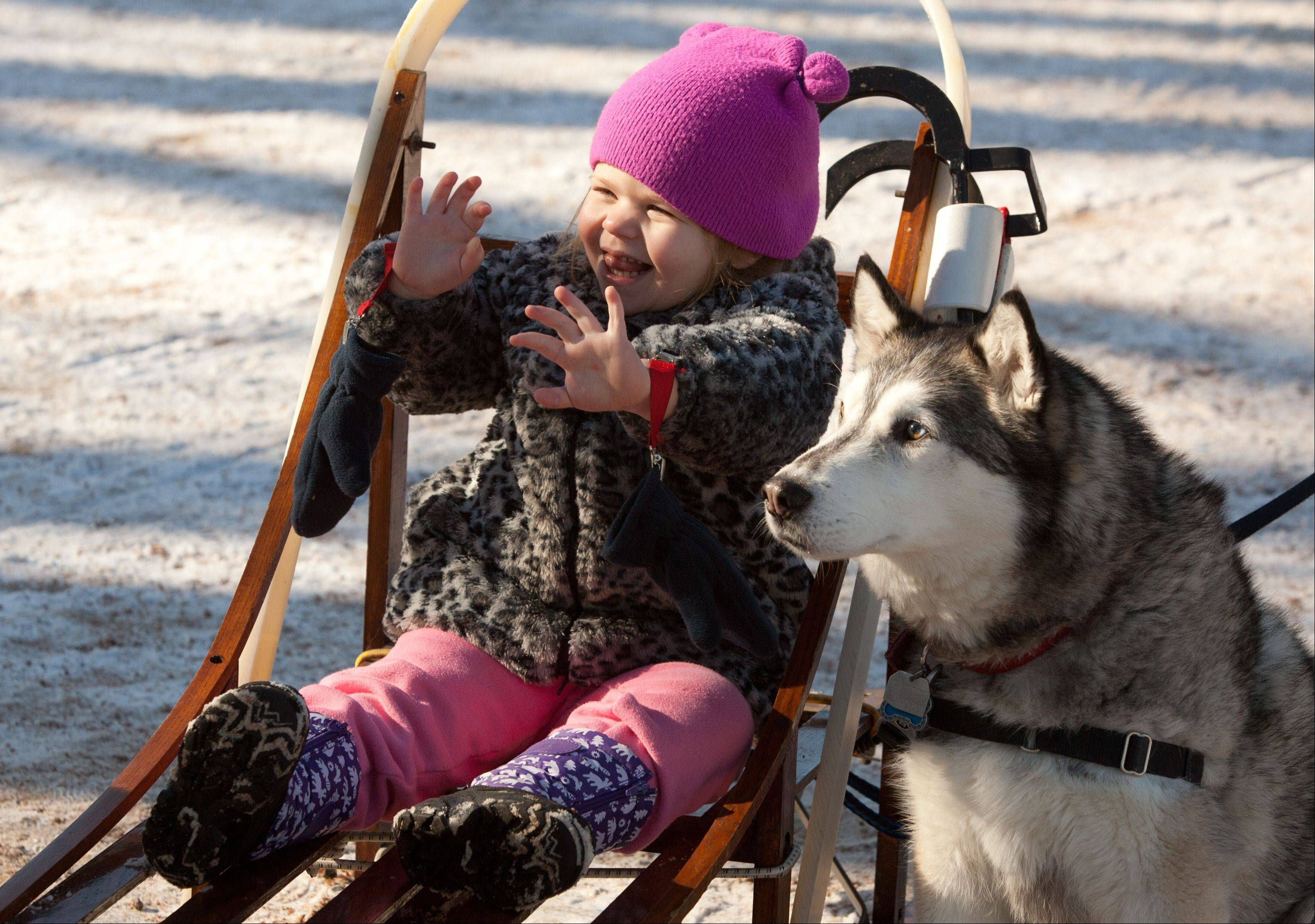 "Eva Potter, 3, of Lombard has her photo taken Saturday with Cago, a Siberian husky reserved through Adopt a Husky, as the Morton Arboretum in Lisle sponsors its annual ""Husky Heroes"" event."
