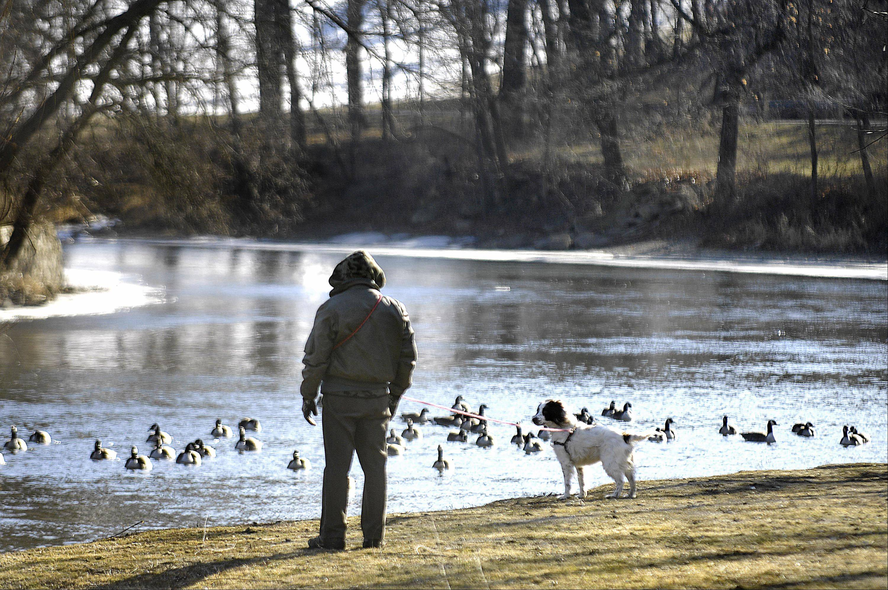 Jim Loftin and his bird dog Bella, a 2 1/2 year old English Springer Spaniel, watch geese on the Fox River in Algonquin Monday in single-digit temperatures. They live in Algonquin and came to the river near the water treatment plant on Arbor Lane.