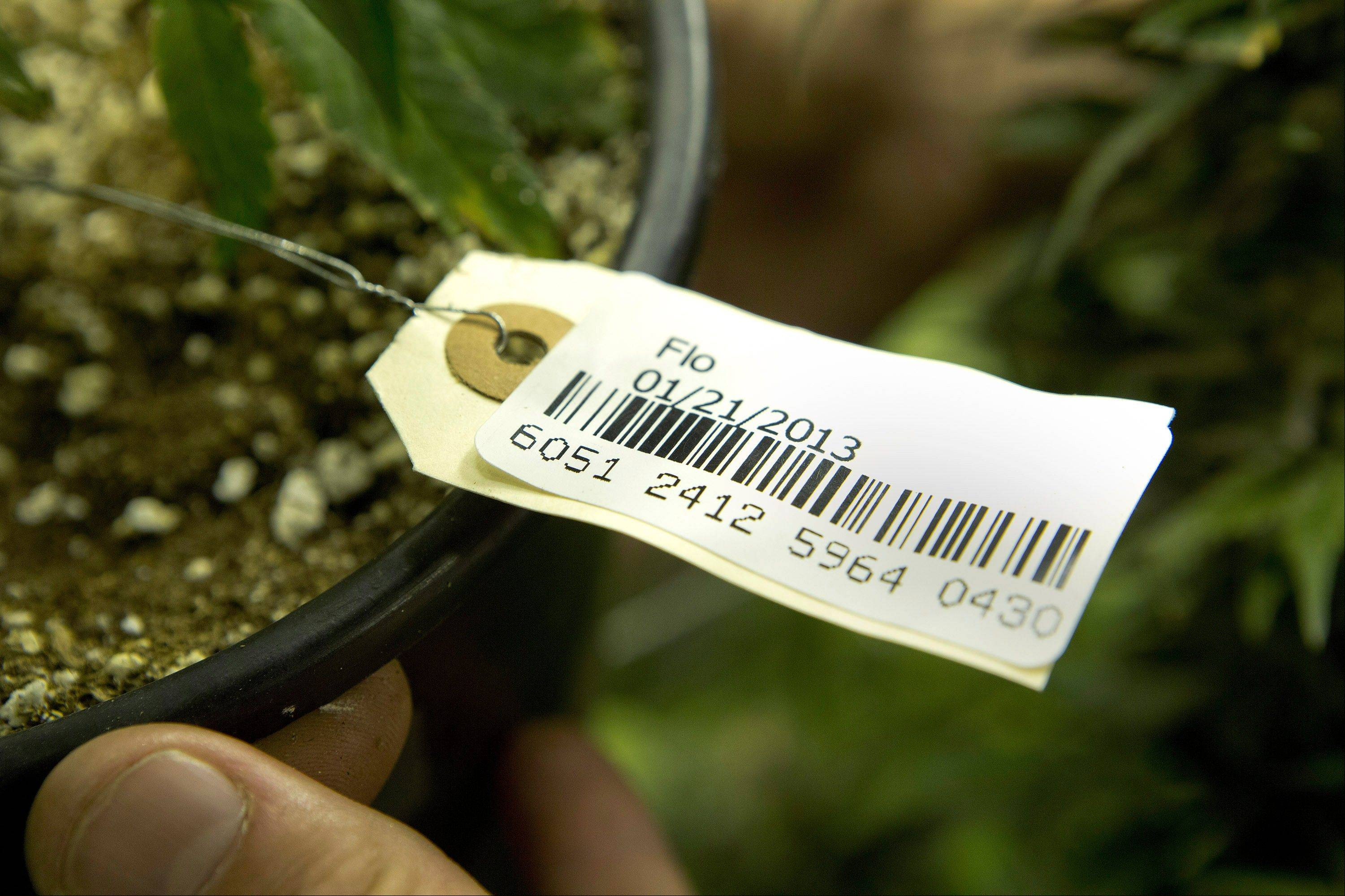 A bar code attached to a marijuana plant at a grow house in Denver. The bar codes are assigned to each plant and follow it through the growing and distribution process. Washington state is considering the use of a similar tracking system.
