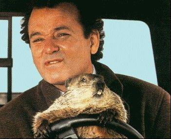 "Bill Murray and a groundhog get behind the wheel of a pickup truck in the 1993 film ""Groundhog Day."" This year's Groundhog Days festival in Woodstock celebrates the film's 20th anniversary."
