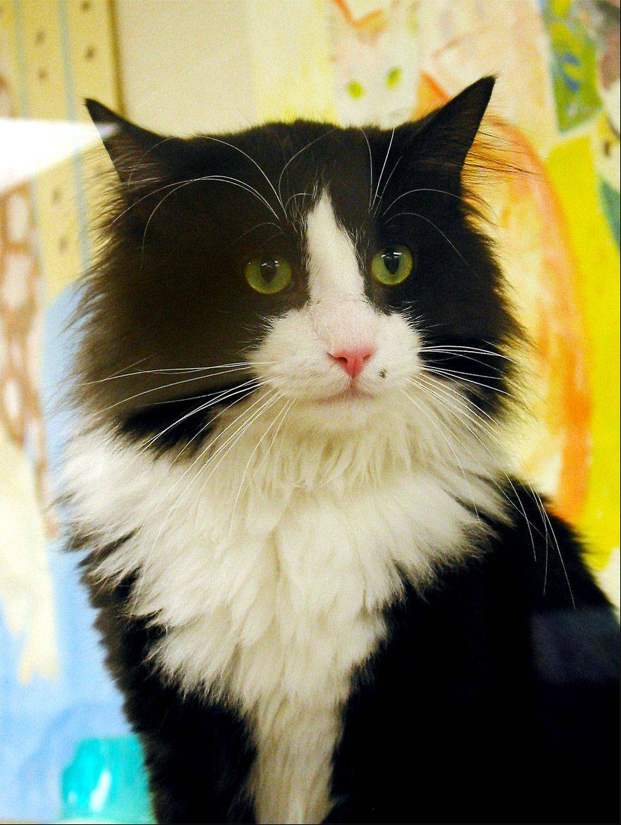 �Coach� neutered male long hair, about 4 years old. Looks pretty cute, unless you�re a mouse or a bird.