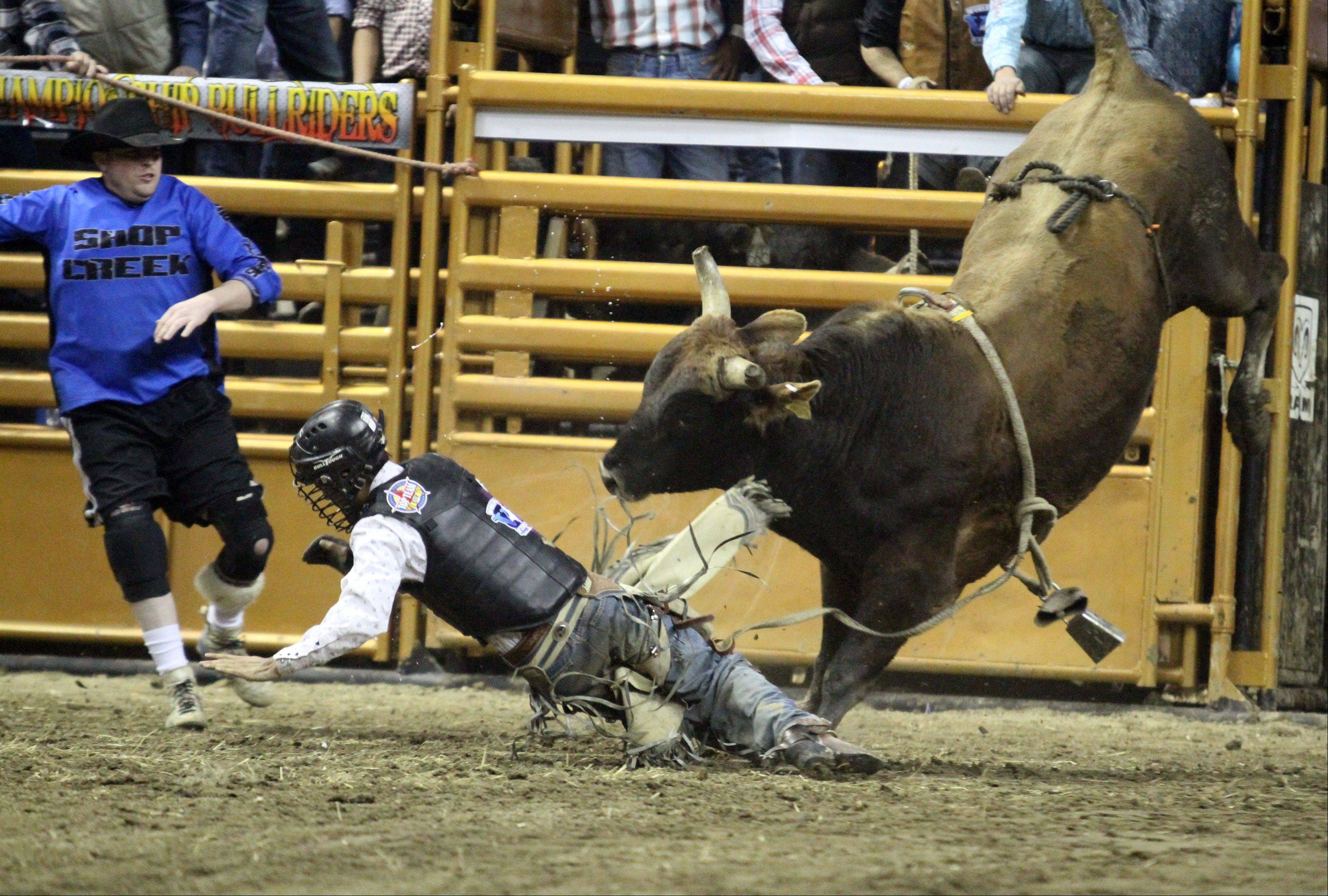 Bullrider Rod McKoewn is thrown off during the Professional Championship Bullrider's World Tour Finale V at the Sears Centre in Hoffman Estates on Saturday, February 2, 2013.