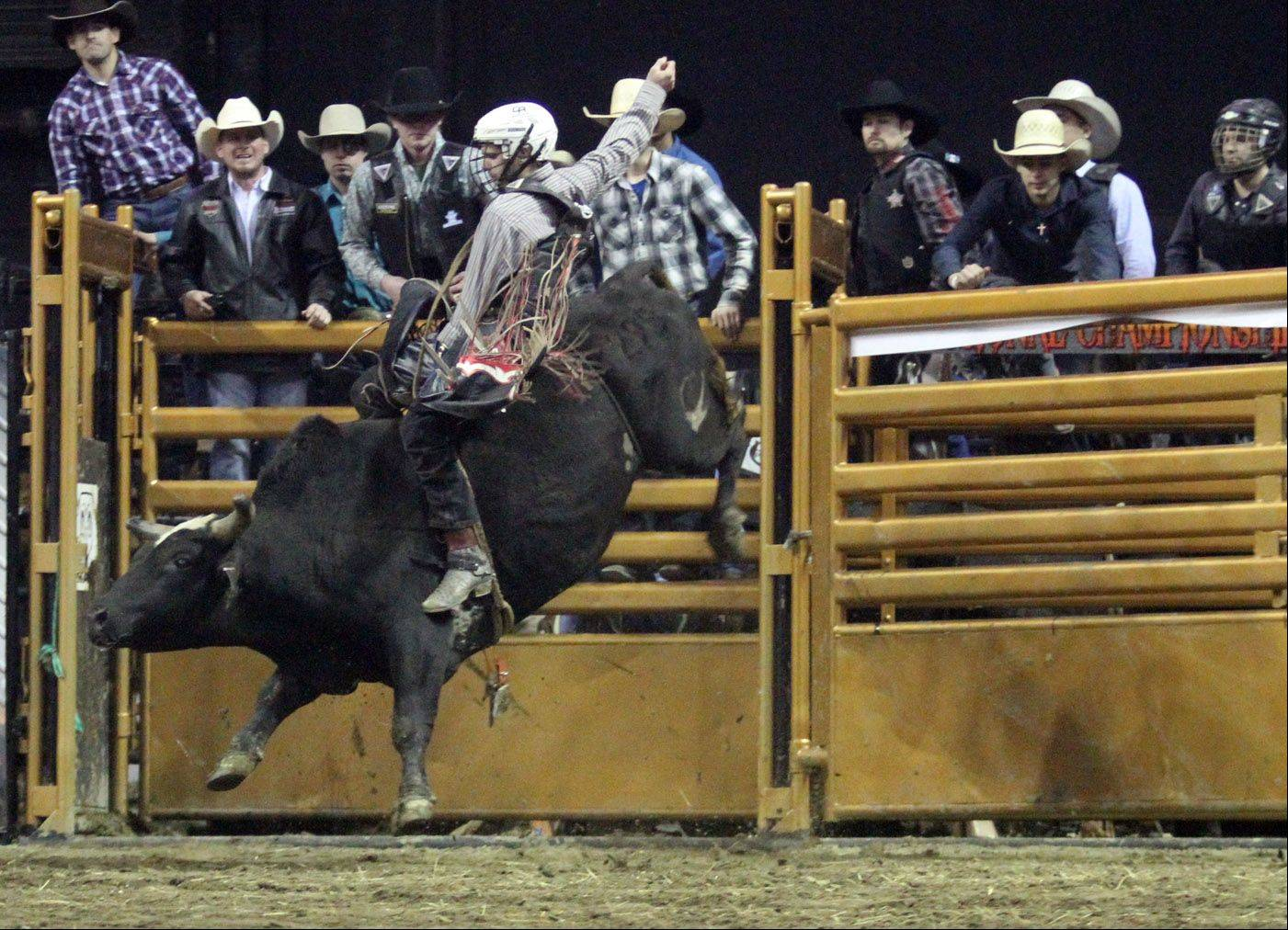 Colton May rides a bull during the Professional Championship Bullrider's World Tour Finale V at the Sears Centre in Hoffman Estates on Saturday, February 2, 2013.