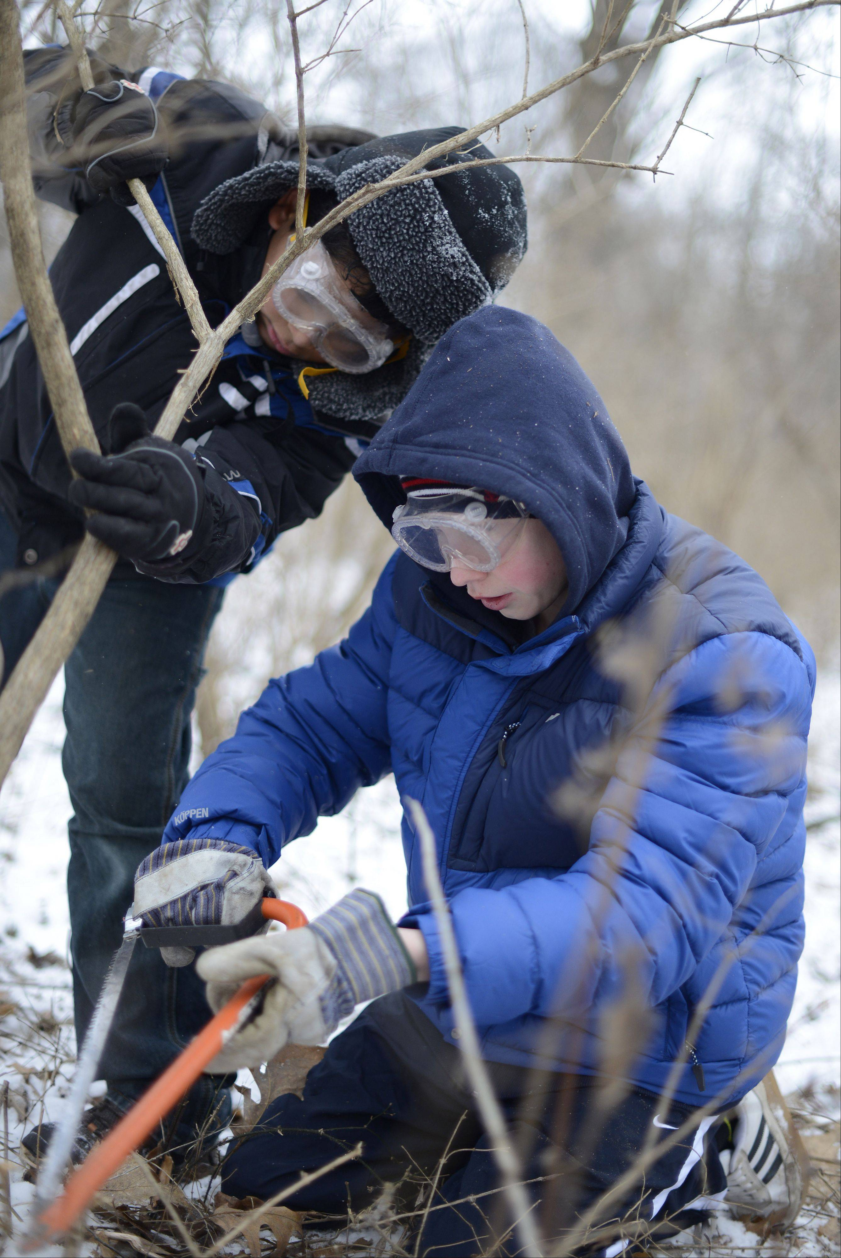 Sammy Gomez, 12, left, helps Dylan Lockwood, 13, both of Elgin, cut down non-native honeysuckle plants at the new Creek Bend Nature Center at LeRoy Oakes in St. Charles.