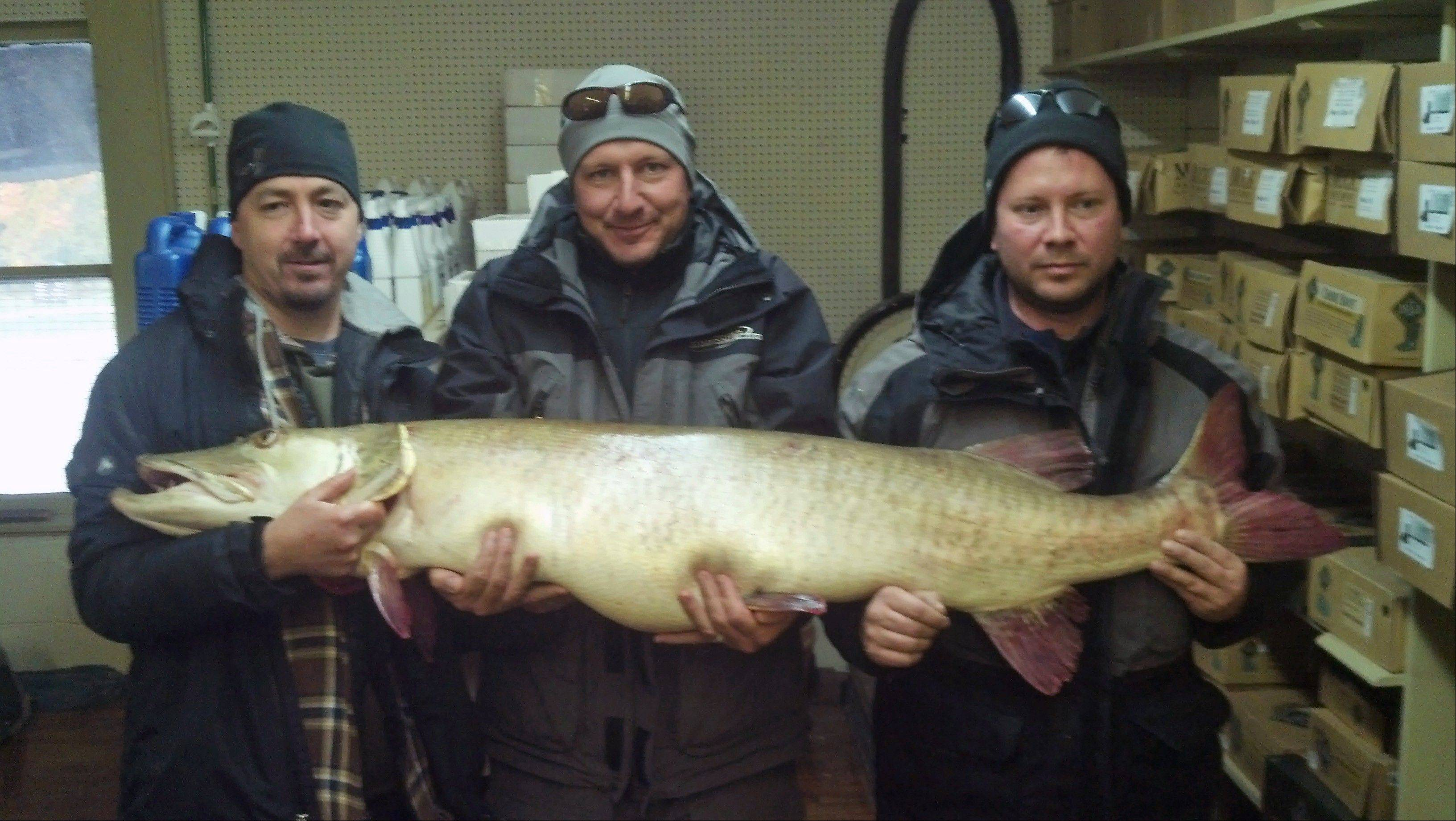 Joseph Seeberger, center, of Portage, Mich., and two friends hold a record-setting muskellunge caught in Antrim County. The muskie weighed 58 pounds, was 59 inches long and had a girth of 29 inches. The catch is now a modern day world record.