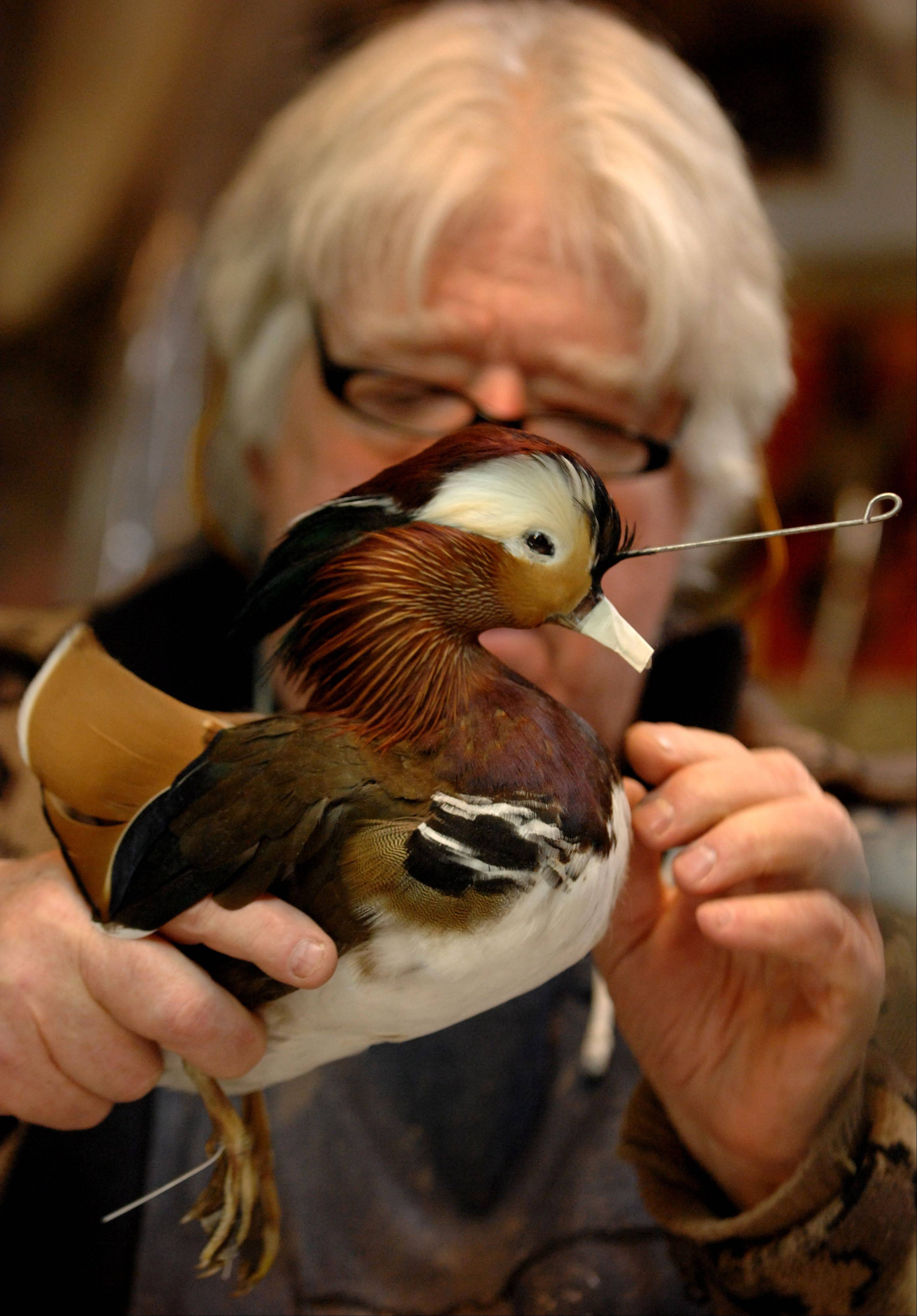 Vern Brancamp estimates that he has mounted between 3000 to 4000 ducks and other birds since opening Vern's Taxidermy in Algonquin 40 years ago.