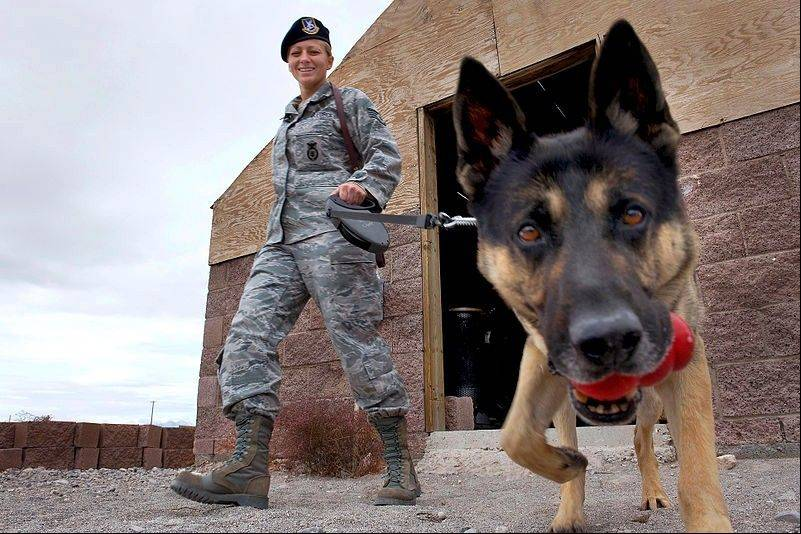 In his working days, this 2010 photo shows Nero with U.S. Air Force Staff Sgt. Bobbie Ohm.