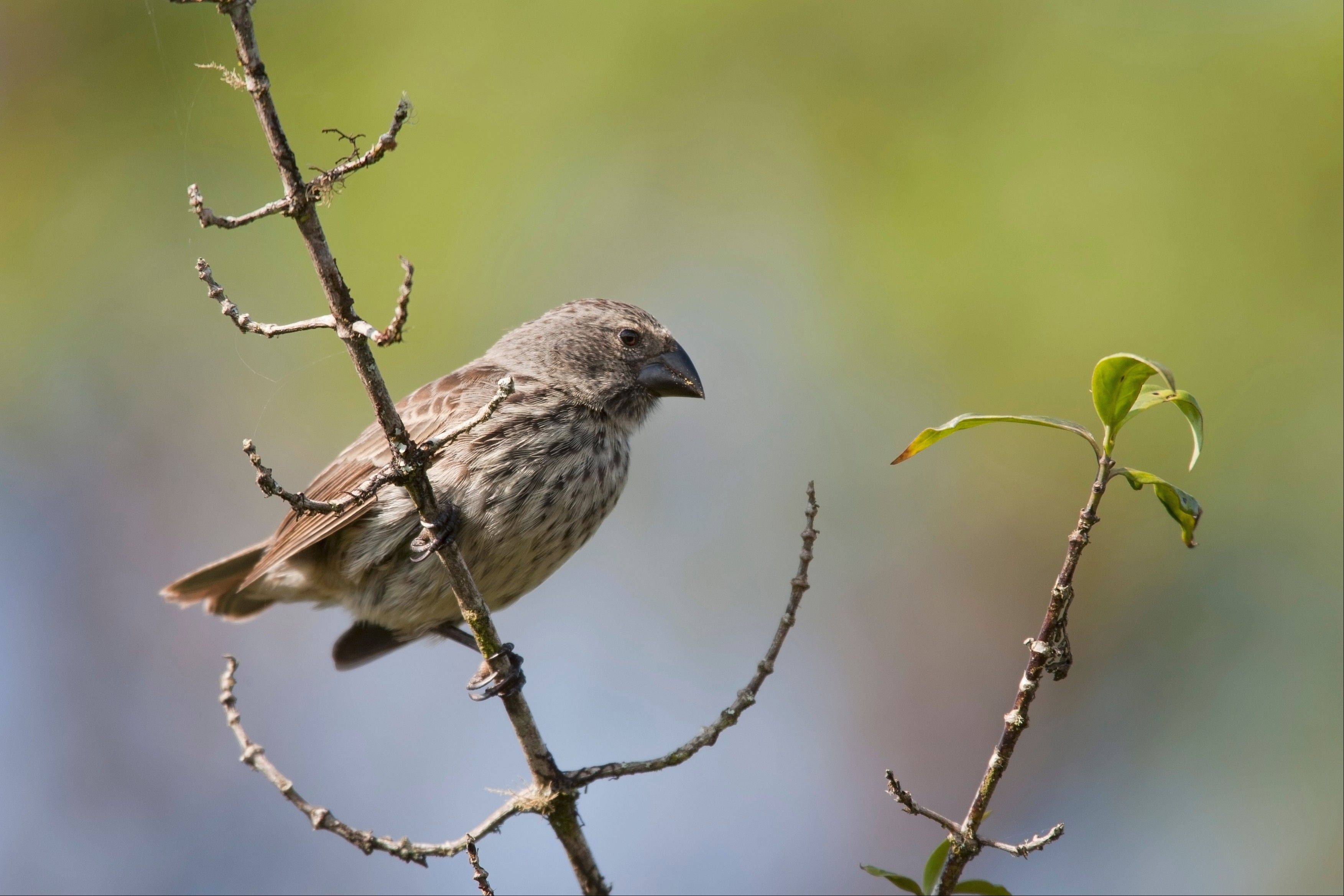 Look for finches and other winter birds at the free Bird Walk at Cantigny Park in Wheaton.