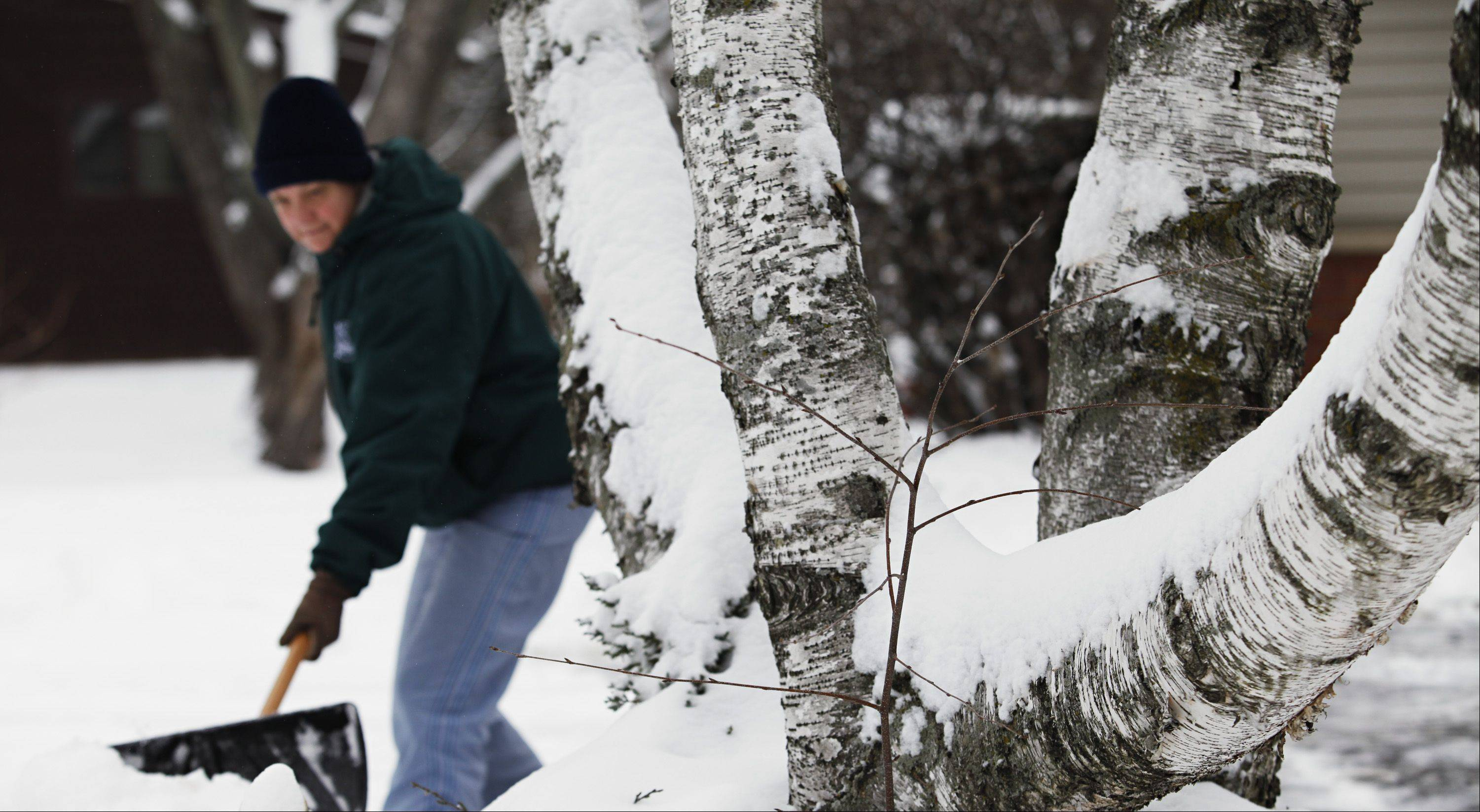 Eva Tipps, of Sleepy Hollow, shovels her driveway Monday morning near a birch tree covered in new snow.