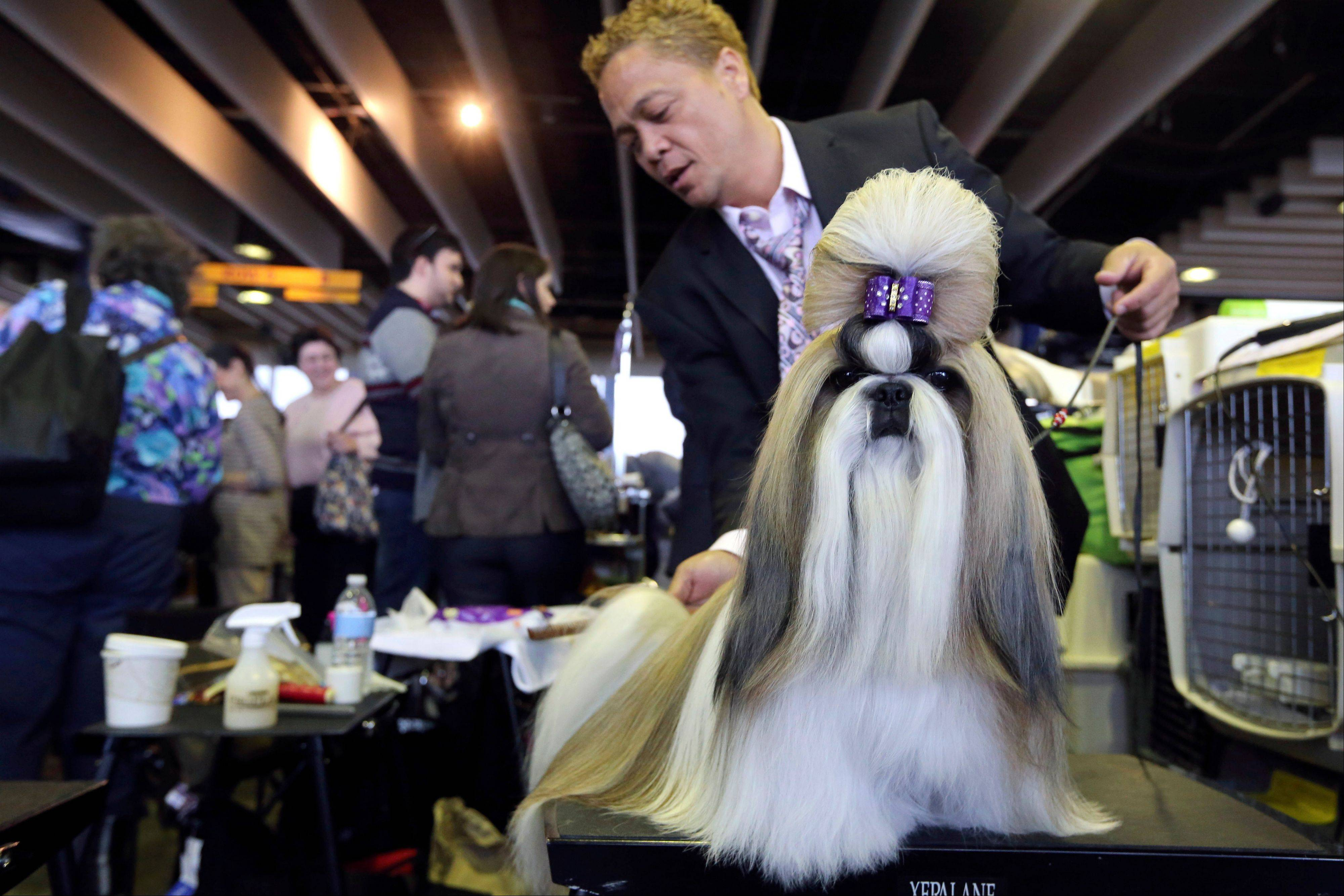 Craig Garcia grooms Fire, a 2-year-old Shih Tzu from Cape Town, South Africa, during the 137th Westminster Kennel Club Dog Show Monday in New York.