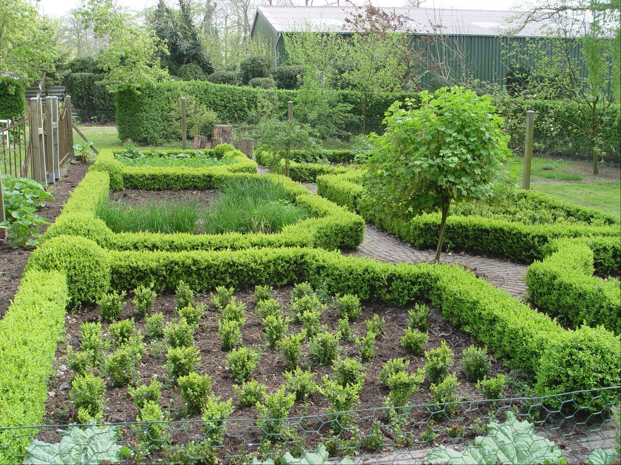 Small boxwood hedges can be used to outline more ornamental potager gardens.