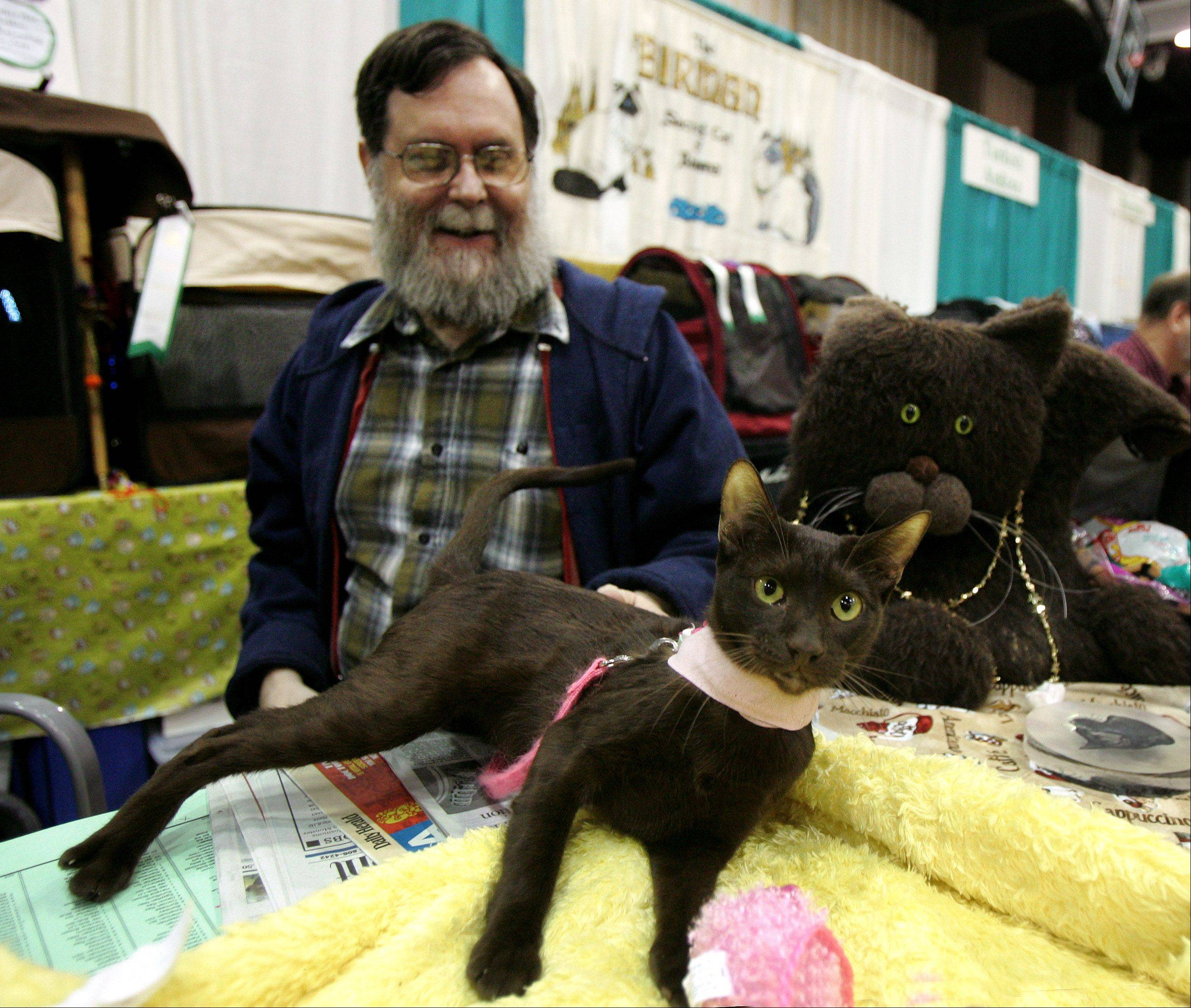 David McKerlie of Palatine plays with a Havana Brown named Kaapi Kriya during last year's Lincoln State Cat Show at Harper College in Palatine. More than 200 cats are expected to compete in this year's show, according to Marci Baturin, show manager.