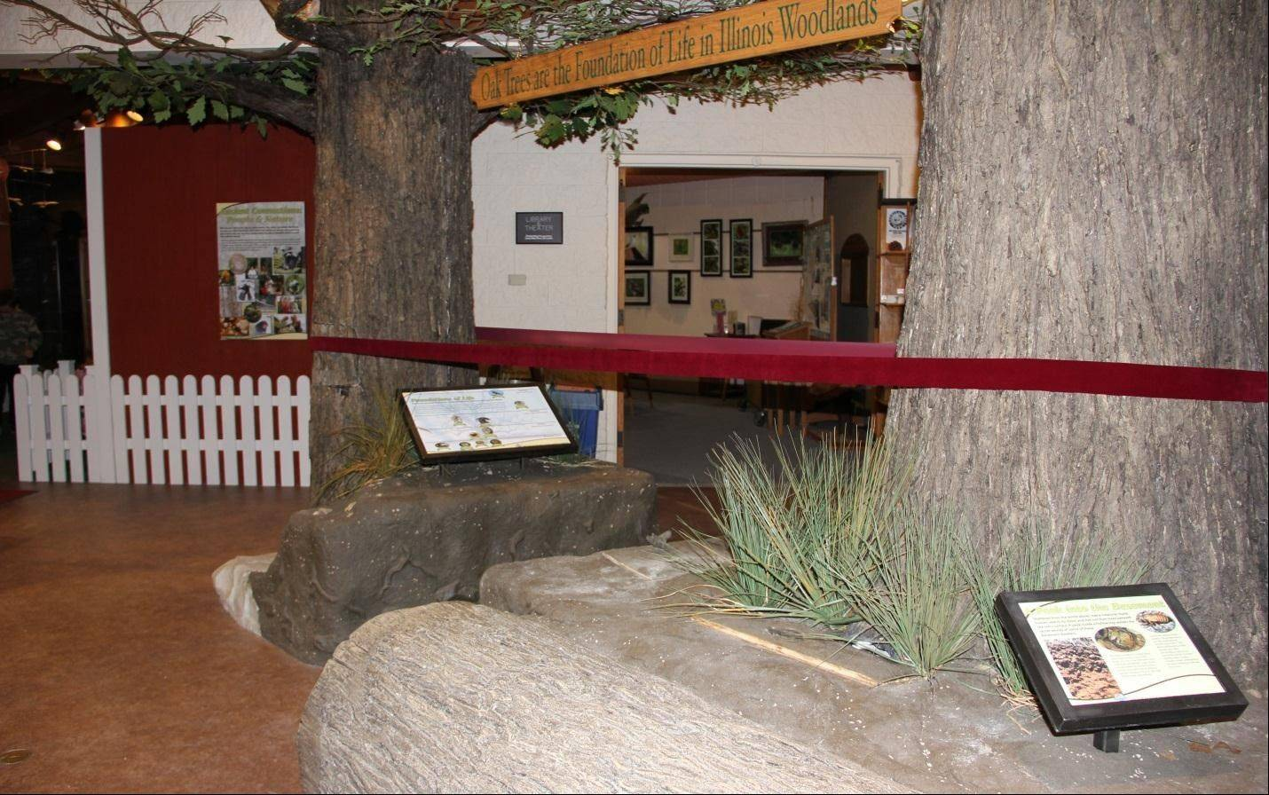 A ribbon wraps between the two new replica oak trees at the Nature Museum at Spring Valley.