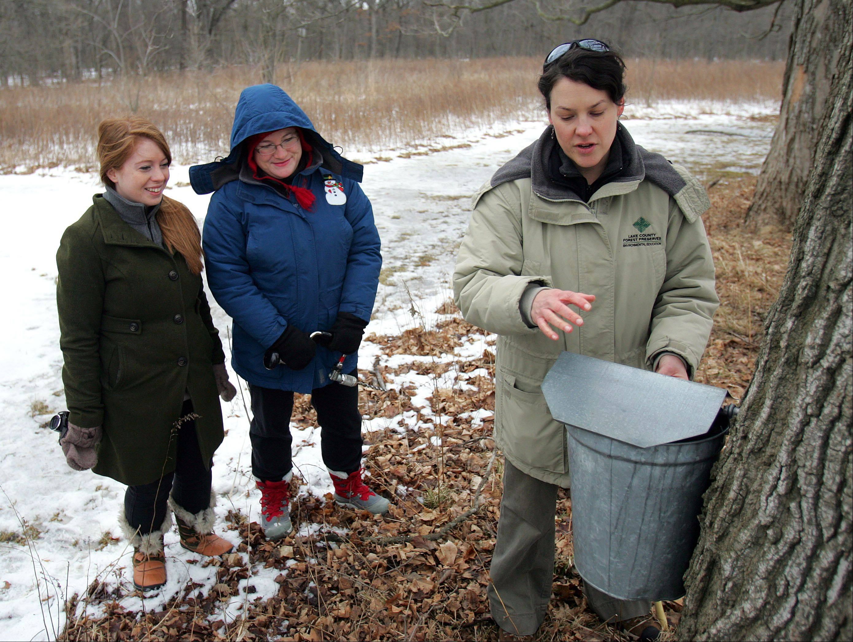 Lake County Forest Preserve Environmental Educator Jen Berlinghof, right, shows fellow employees Rachel Kosmal and Jenny Sazama how to tap sugar maple trees at Ryerson Conservation Area near Riverwoods.