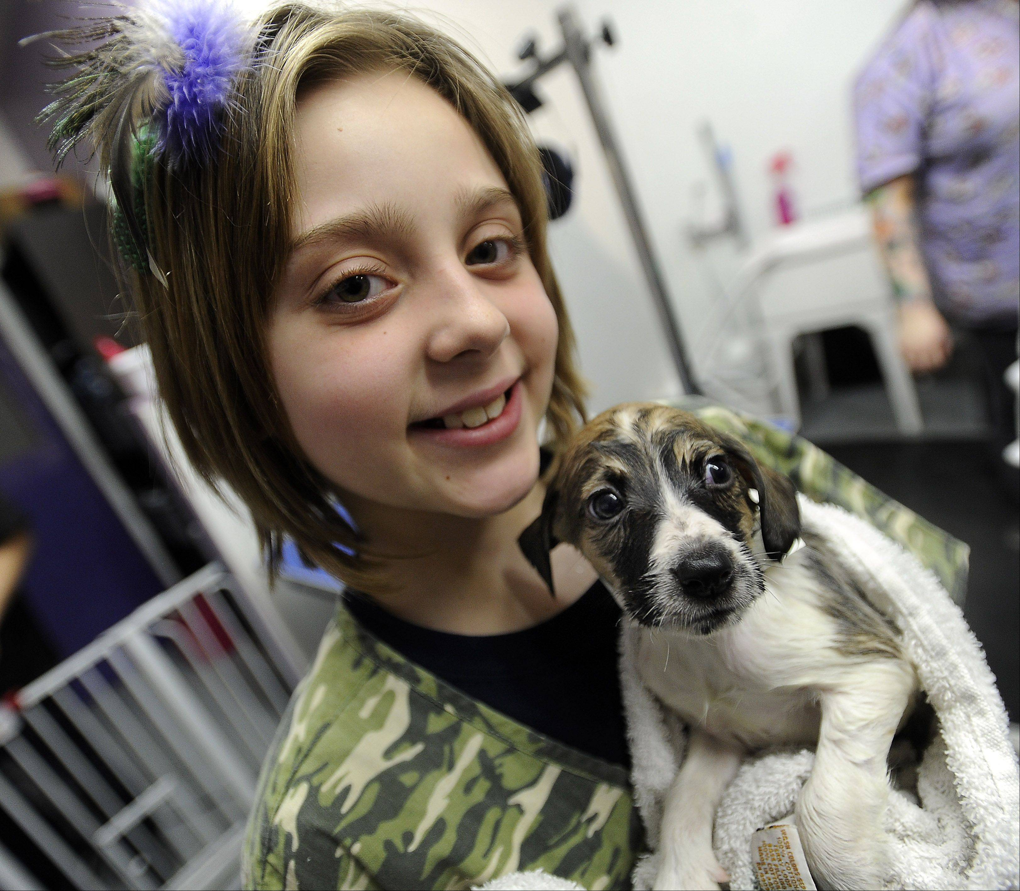 Carmen DiNella, 8, of Elgin, towel dries one of the 35 puppies that were rescued.