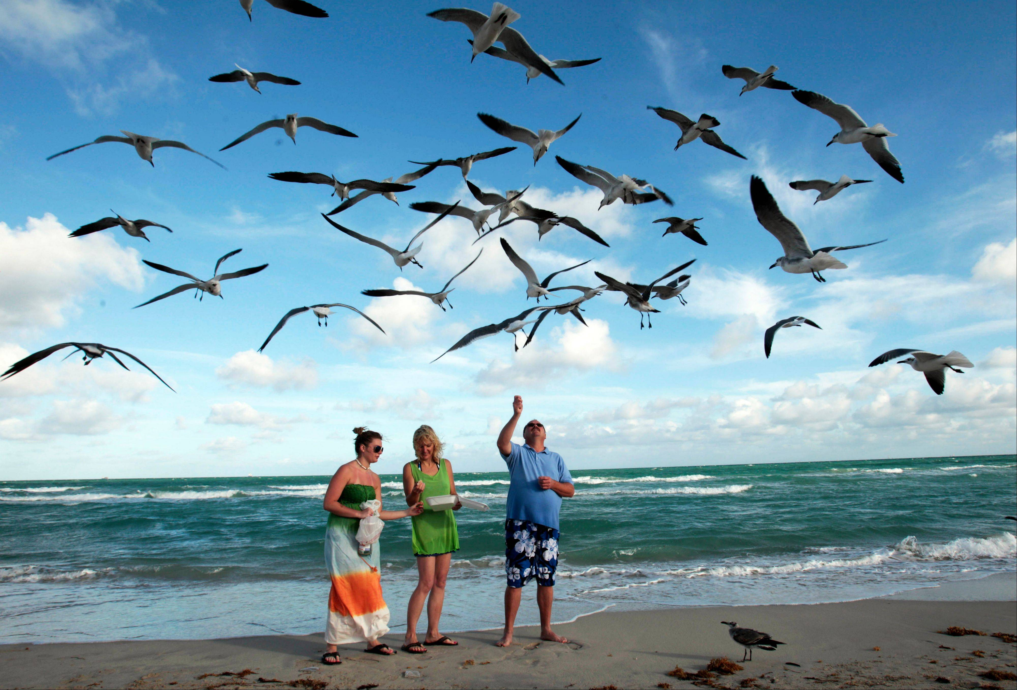 Preslee Rakes, left, her mother Tina Rakes, center, and Brad Cunningham, right, all from Kansas, feed seagulls during a visit to the South Beach area of Miami Beach, Fla.