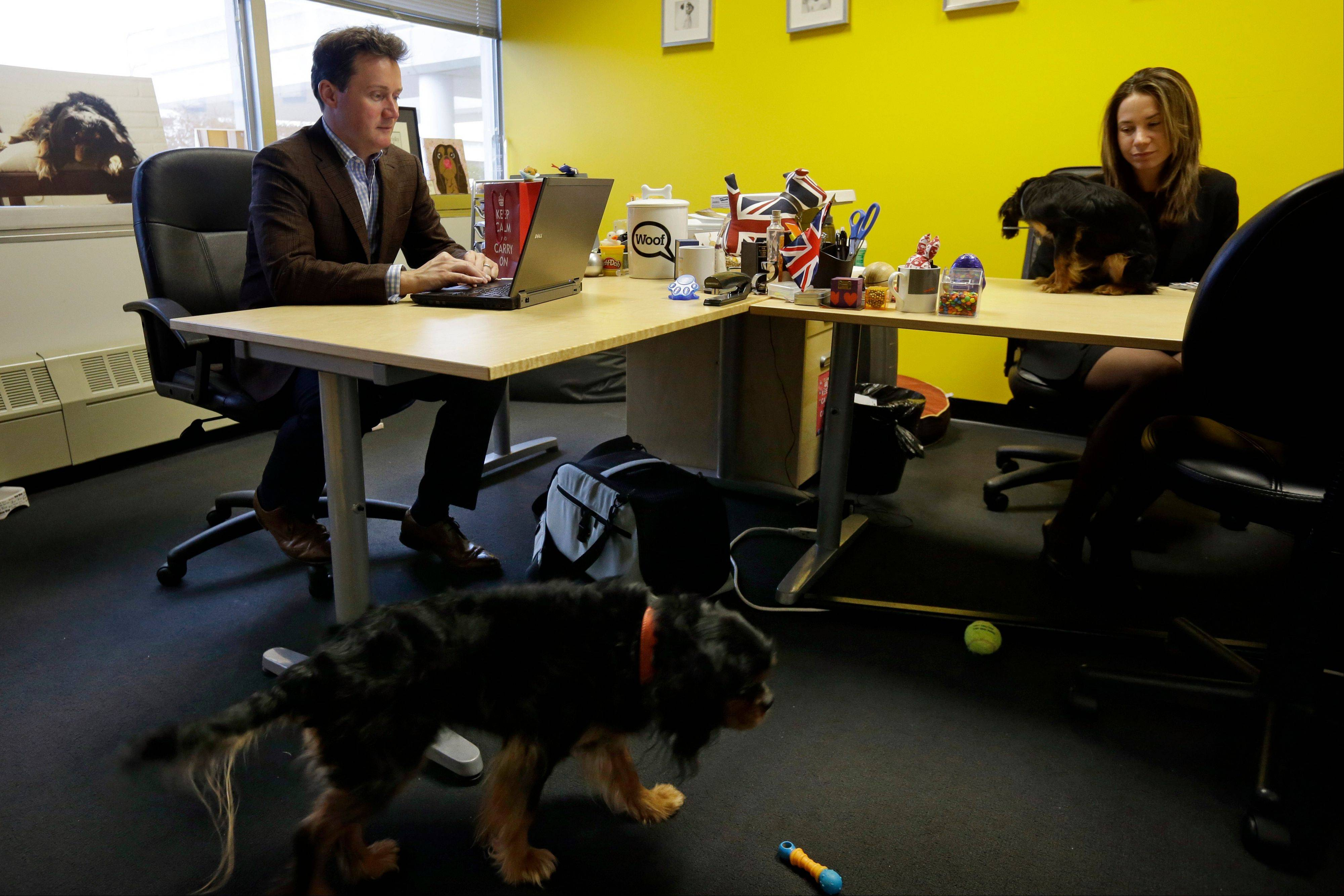 Chris and Natasha Ashton, owners of Petplan, work in the offices of their pet insurance company, in Philadelphia.