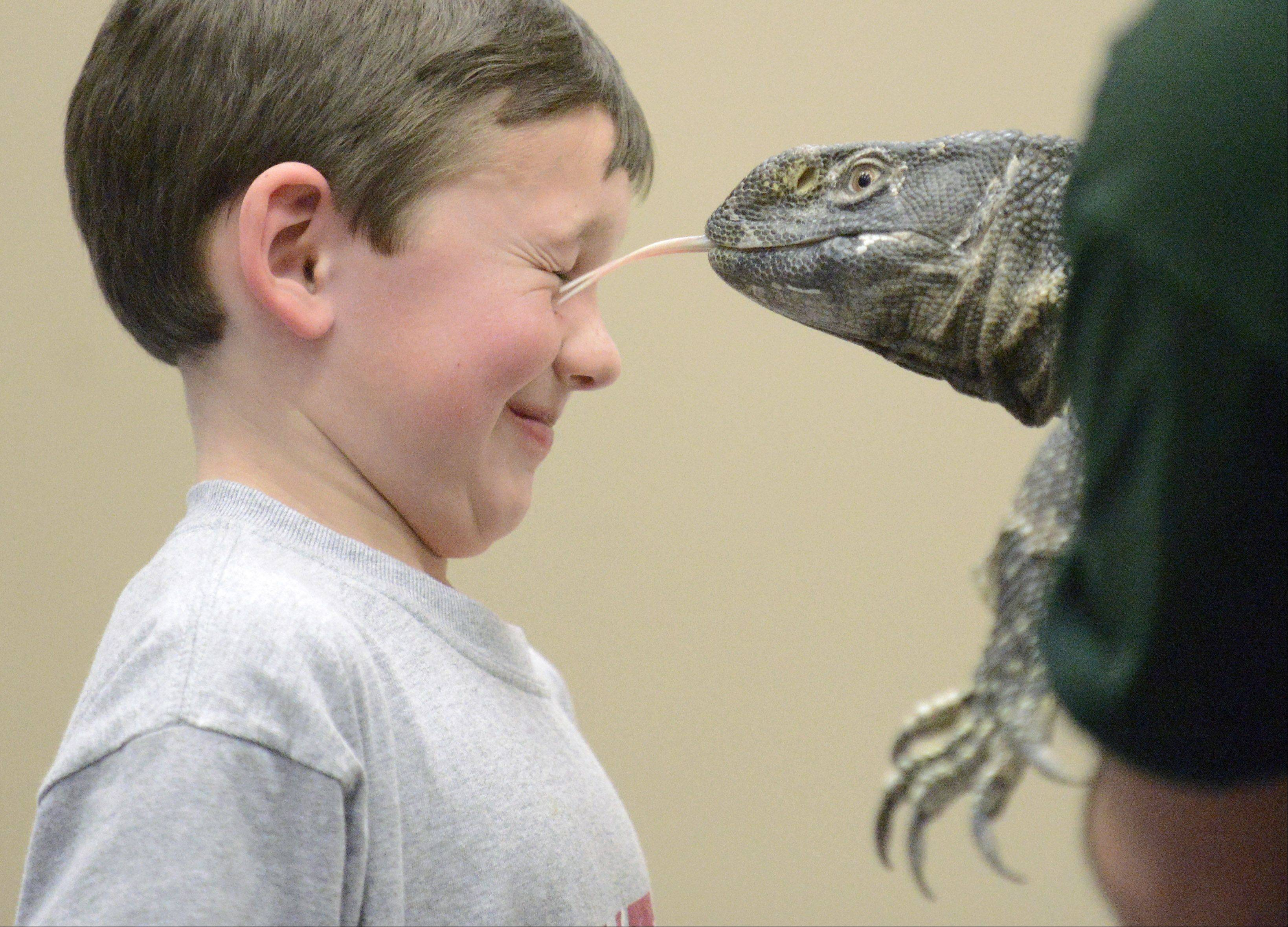 Luke O� Connor, 8, of Batavia gets a kiss from Zaney, a black throat monitor lizard during a presentation by Jim Galeno of Dave DiNaso�s Traveling World of Reptiles at the Batavia Public Library Saturday. Zaney uses his tongue to smell. The presentation was the finale of the Winter Reading Club.