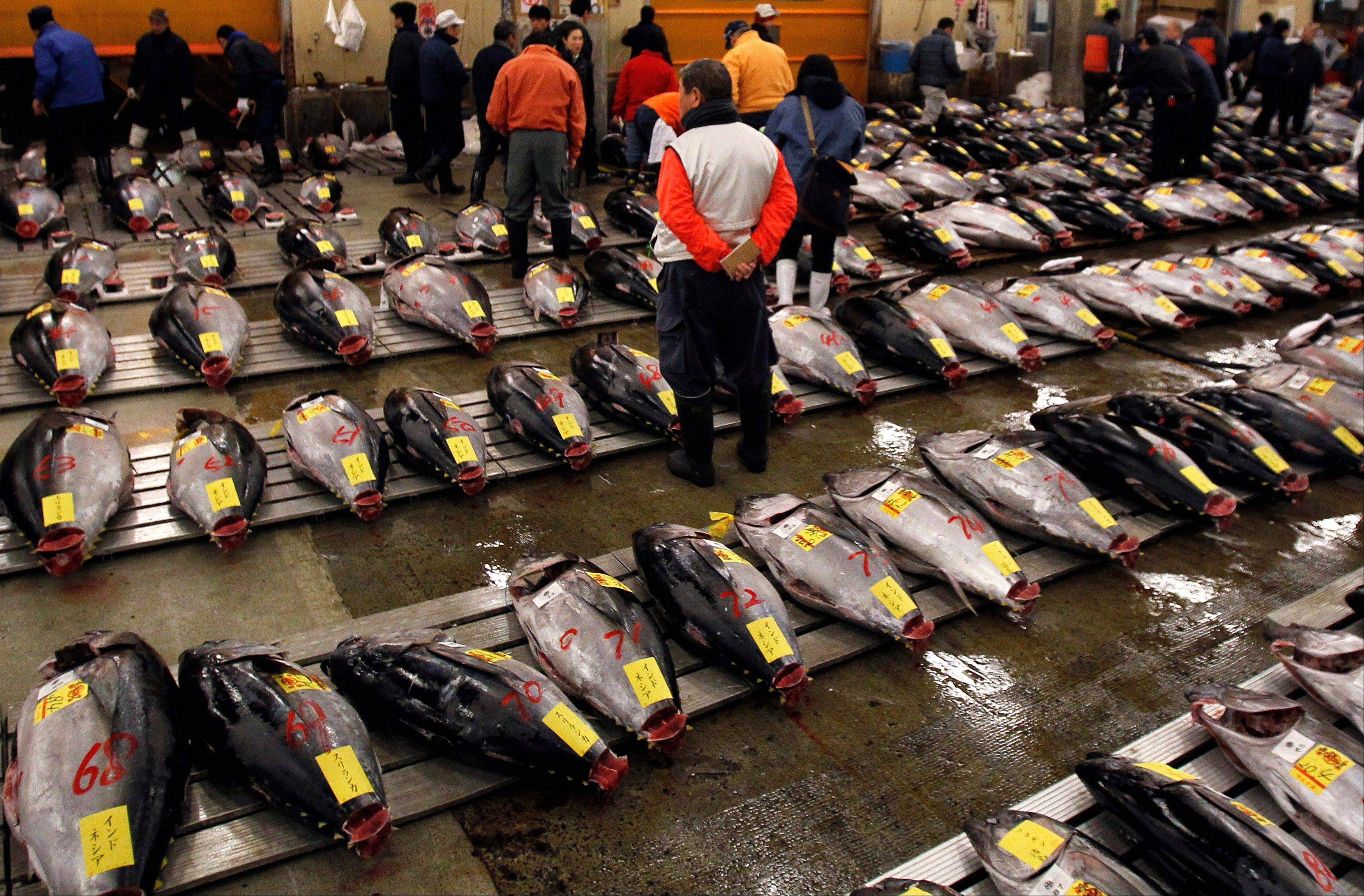 Catching bluefin tuna, called �hon-maguro� here, is a lucrative business. A single full-grown specimen can sell for 2 million yen, or $20,000, at Tokyo�s sprawling Tsukiji fish market. Japanese fishermen are vying with Korean, Taiwanese and Mexican fisherman for a piece of a $900 million wholesale market.