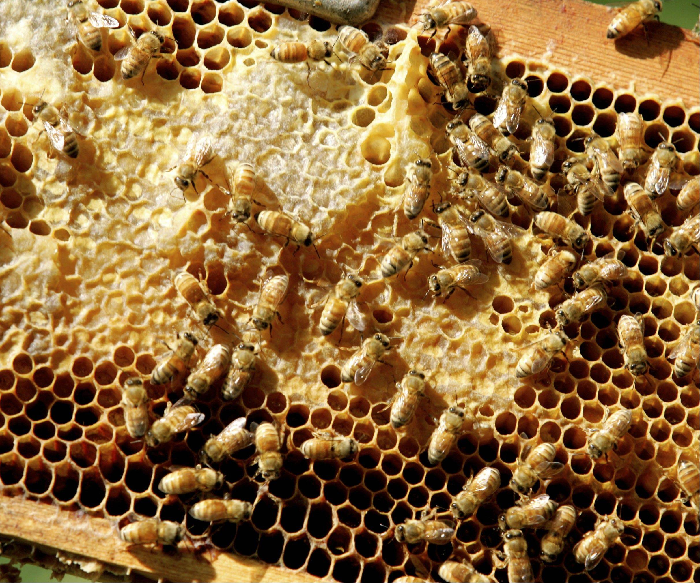 Learn about the state of bees in McHenry County at the next meeting of the Green Drinks McHenry County on Wednesday, March 6.