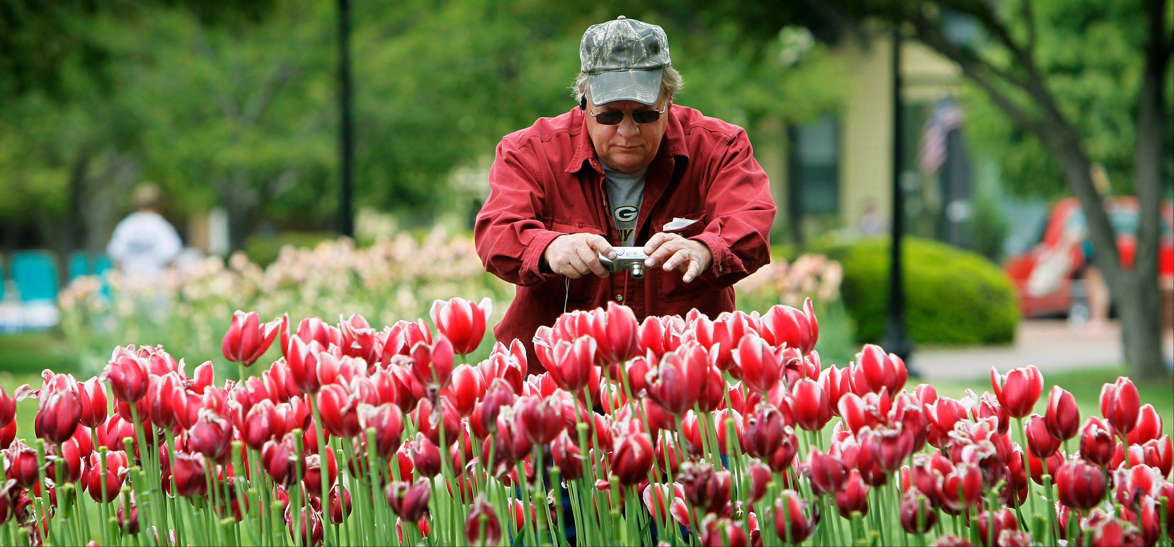 Bud Moe, of Barron, Wis., takes pictures of tulips on display during the annual Pella Tulip Time festival in Pella, Iowa.