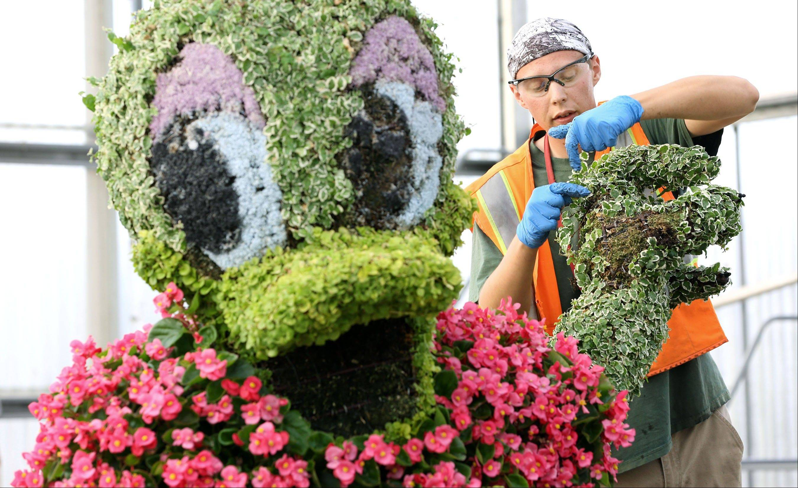 A topiary specialist works on a Daisy Duck topiary at the Epcot front entrance during the 20th Epcot International Flower & Garden Festival at Walt Disney World Resort in Lake Buena Vista, Fla.