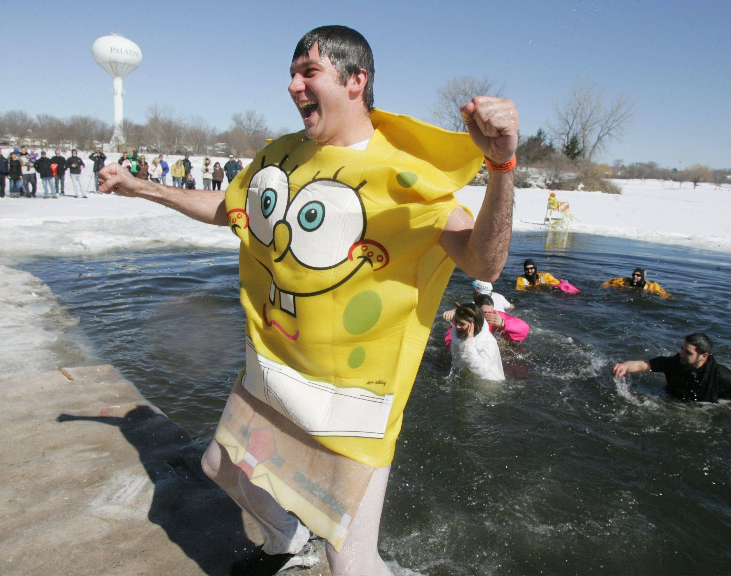 Danny Solovastru, of Morton Grove, dresses like SpongeBob as he jumps out of the frigid water during the 2013 Palatine Polar Plunge Sunday at Twin Lakes Recreation Area in Palatine.