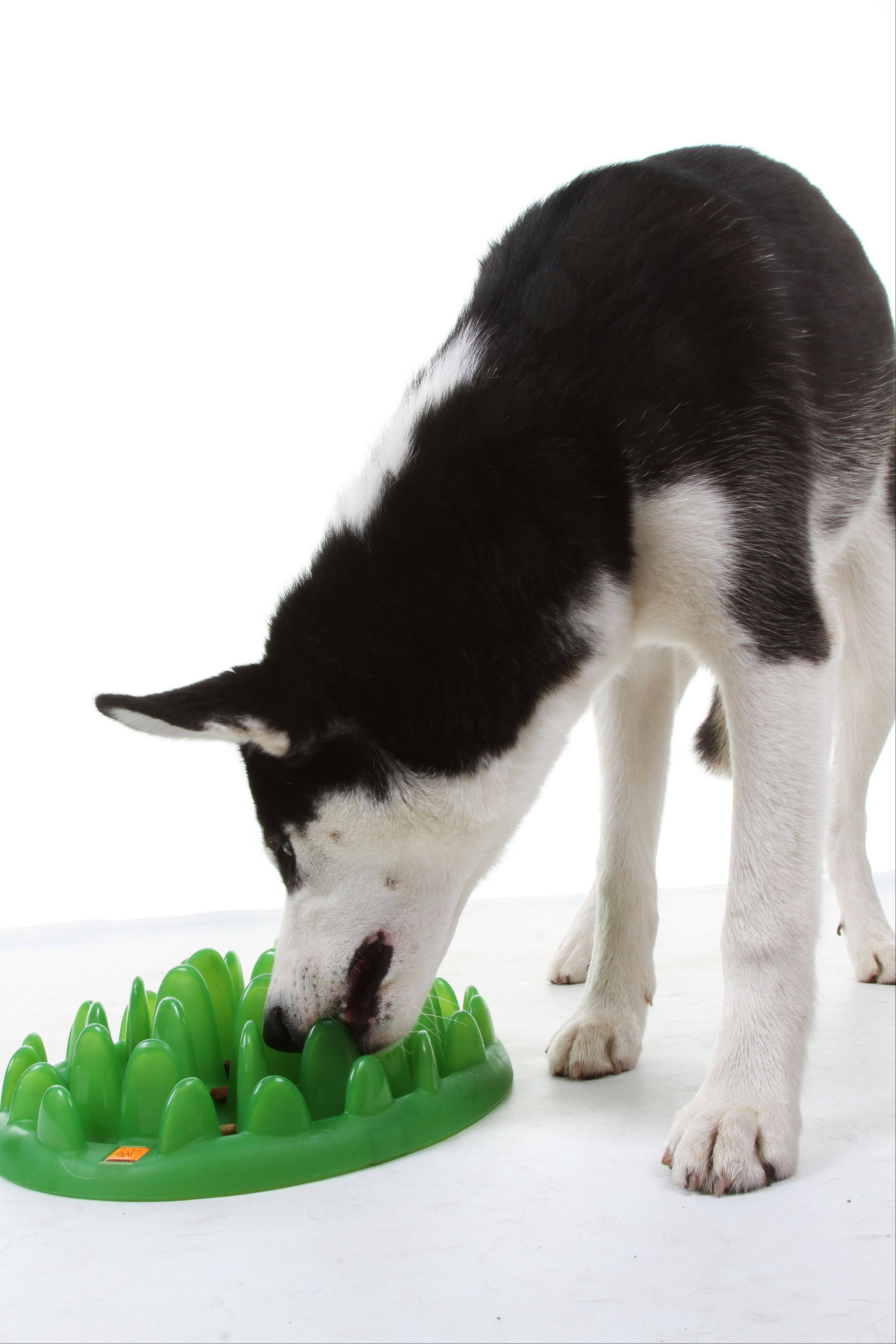 Treat mazes -- like this GREEN interactive feeder -- make it a challenge to extricate the treats, engaging the animal's mind and making the reward more satisfying.