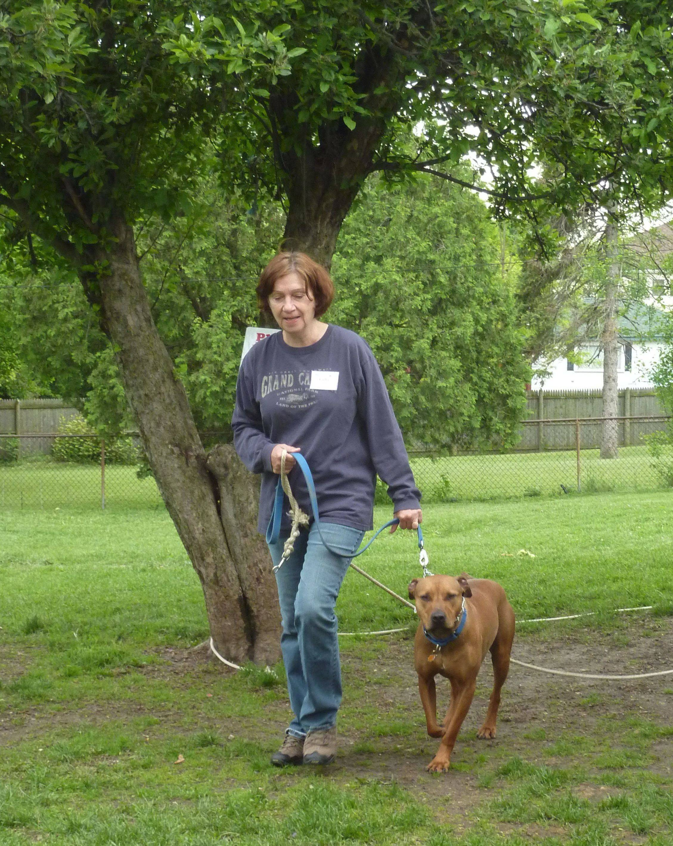 The West Suburban Humane Society in Downers Grove has about 350 volunteers like Cathy Butler, walking Jake, a dog up for adoption.