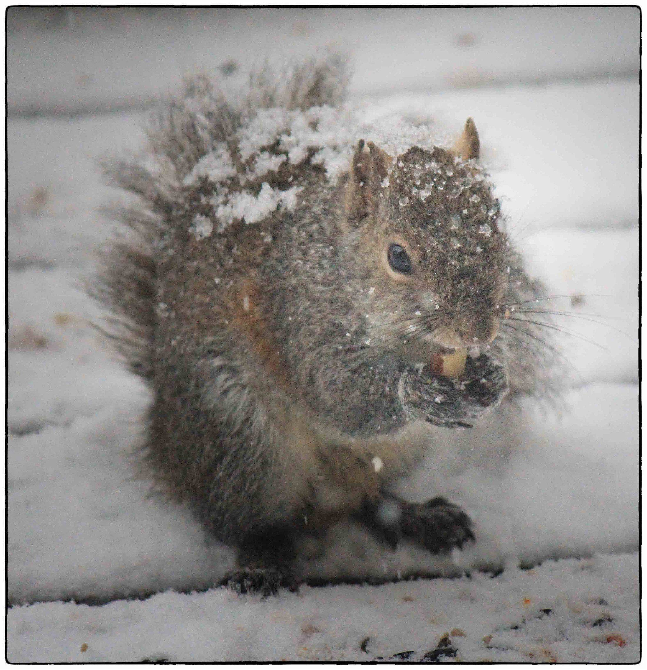 The snowfall on March 5th didn't keep the squirrels away!