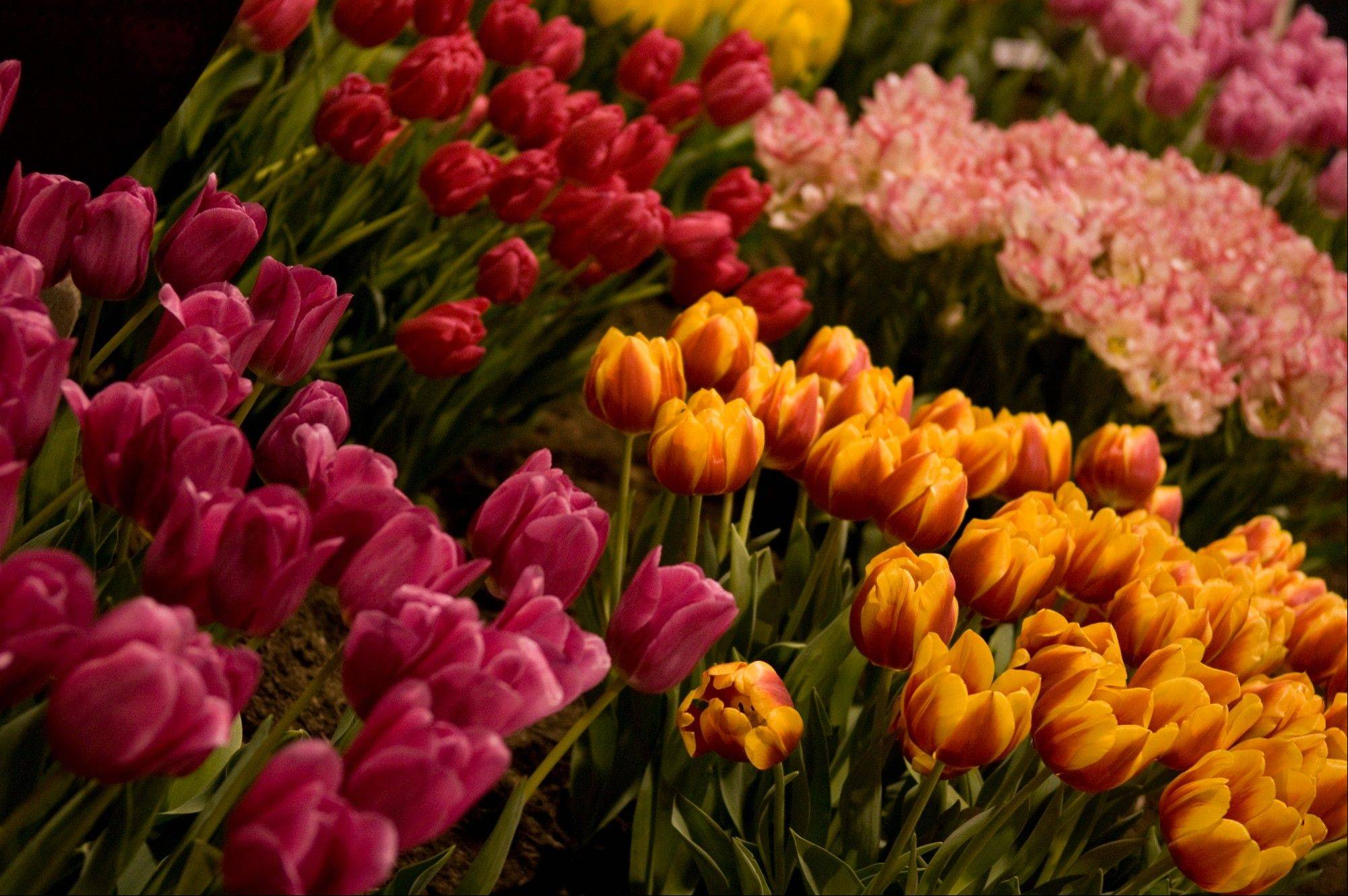 The Chicago Flower & Garden Show returns to Navy Pier in Chicago.