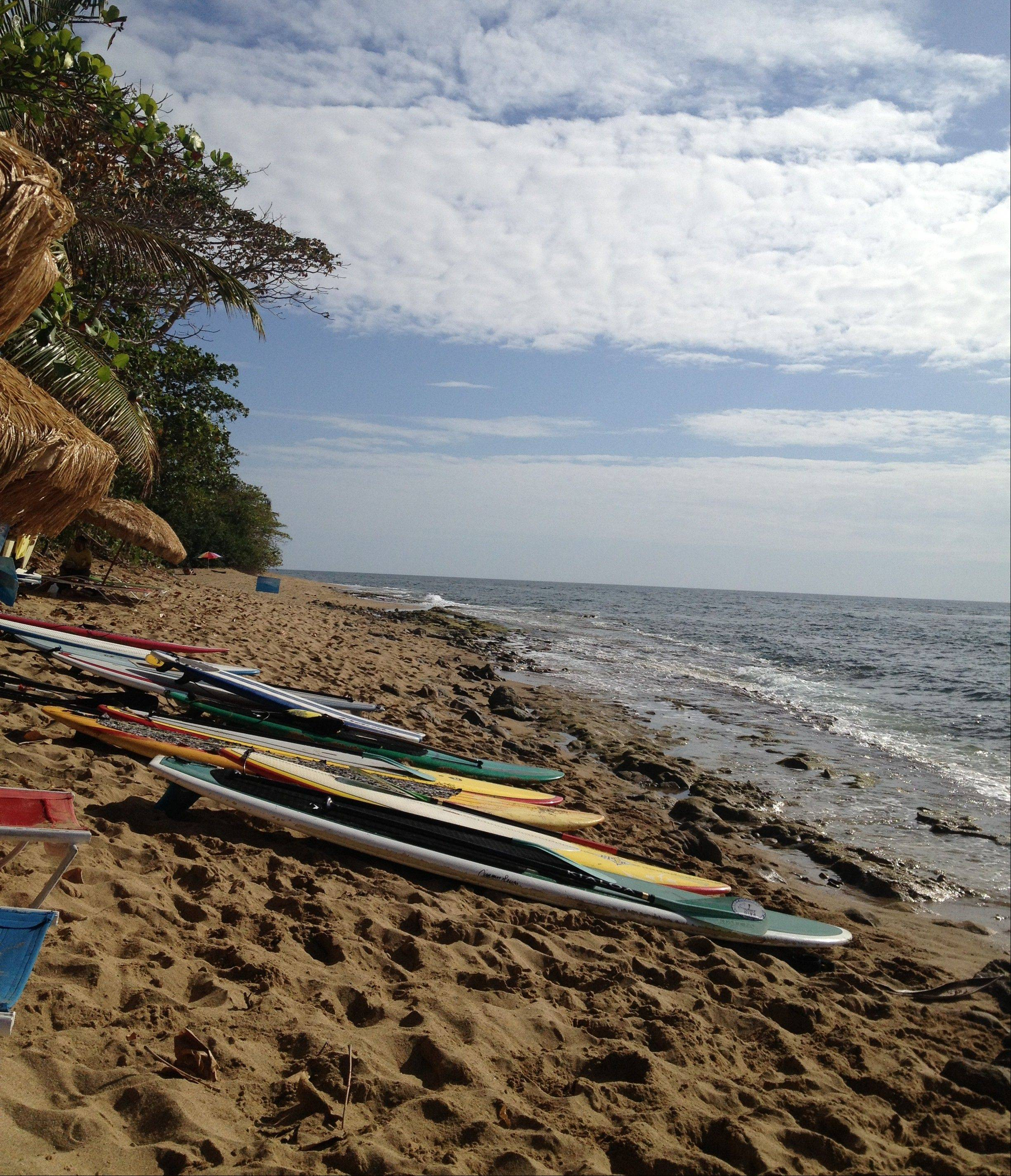 Paddleboards are lined up on the beach in Rincon, Puerto Rico, for use by guests at a stand-up paddleboard and yoga retreat.