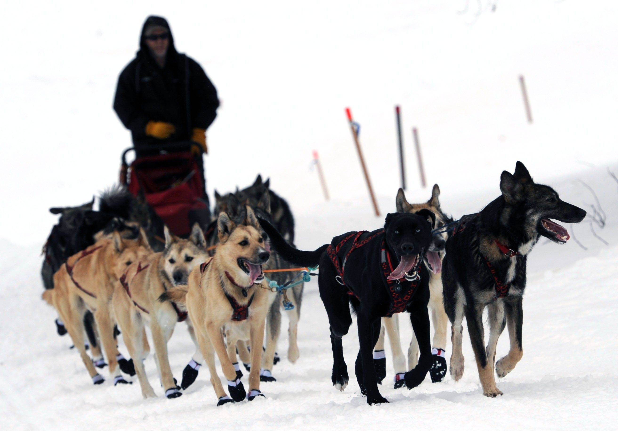 Four-time Iditarod Trail sled dog race champion Jeff King arrives Friday in Anvik, Alaska.