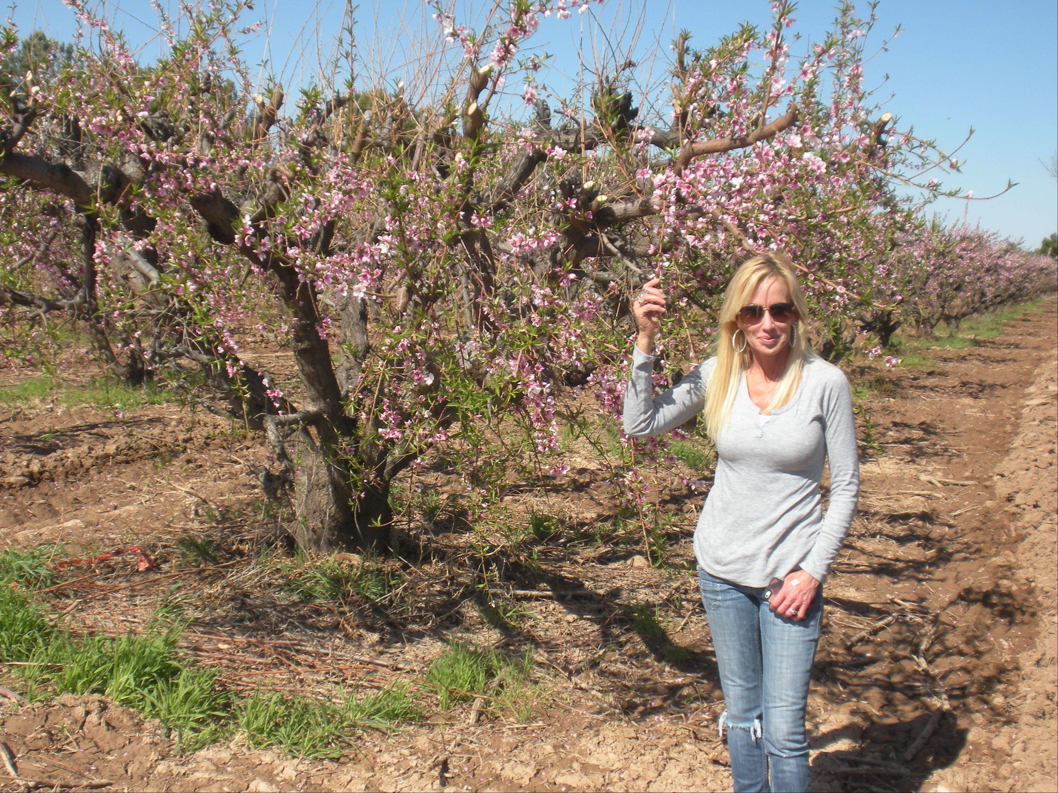Carrie Schnepf opens her family's farm to the public during peach blossom time.