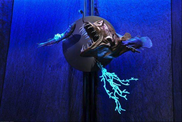 You can learn more about the anglerfish at the new Creatures of Light exhibit at the Field Museum.