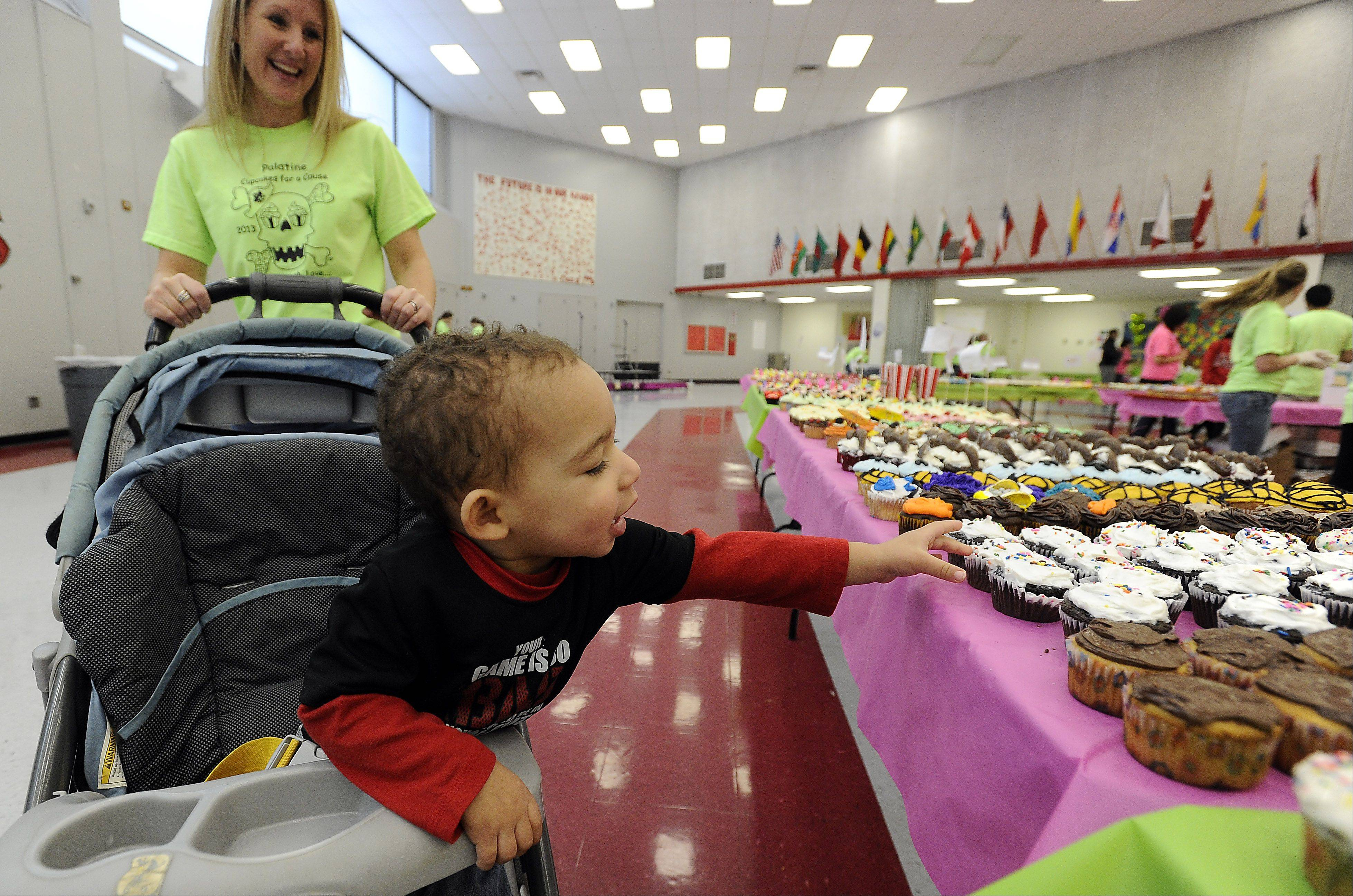 Jayden Wright, 2, and his mom Deanna check out over 2000 cupcakes for sale as part of the cupcake fundraiser at Palatine High School Saturday.
