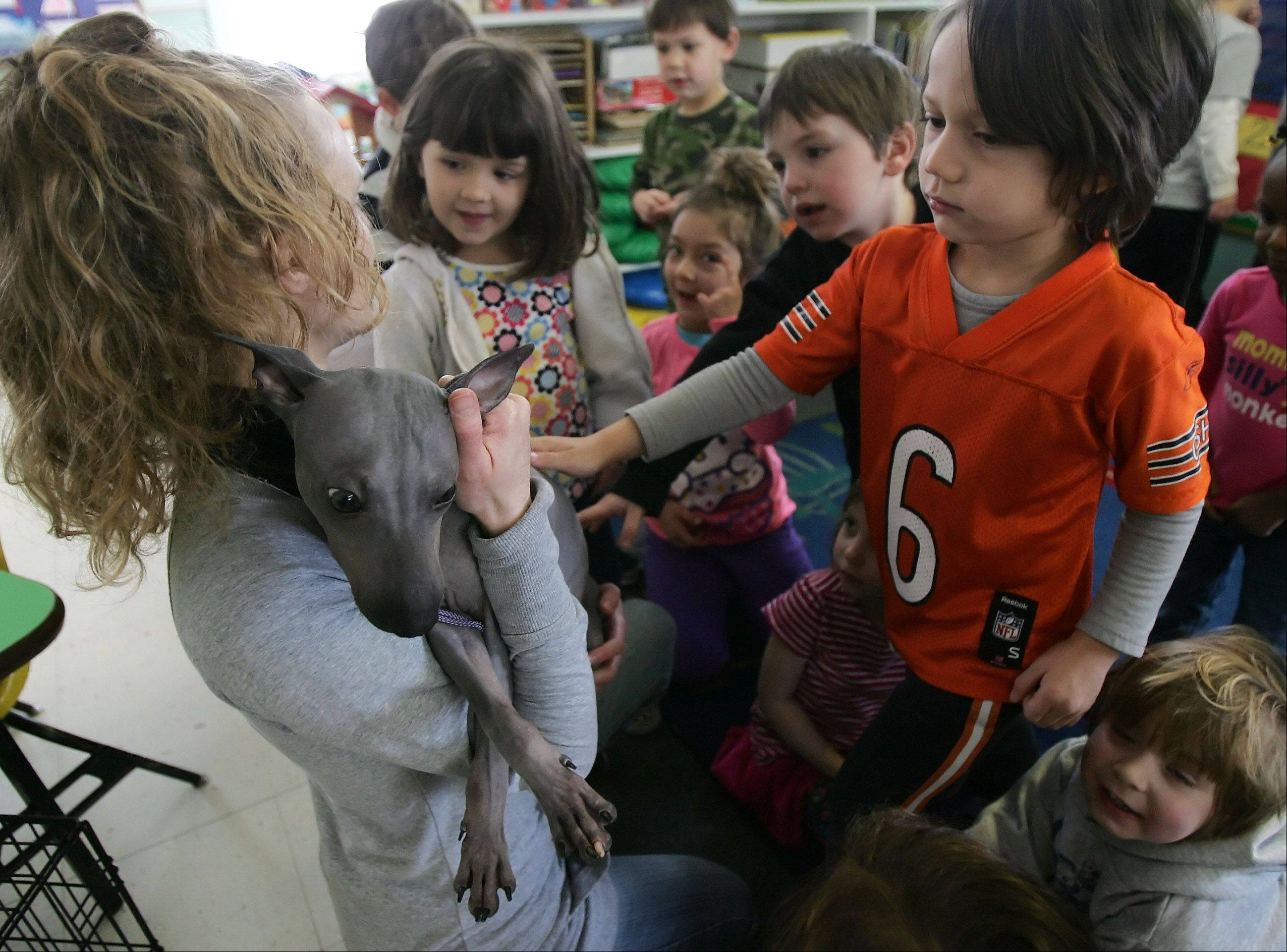 Tai RuBert, 5, pets Bentley, an American hairless terrier, shown by Dana Koch, of Best Pets of Antioch, to children at the Lindenhurst Early Childhood Center Tuesday. The hairless animal exhibit was a way of teaching children how families with allergies could have pets.