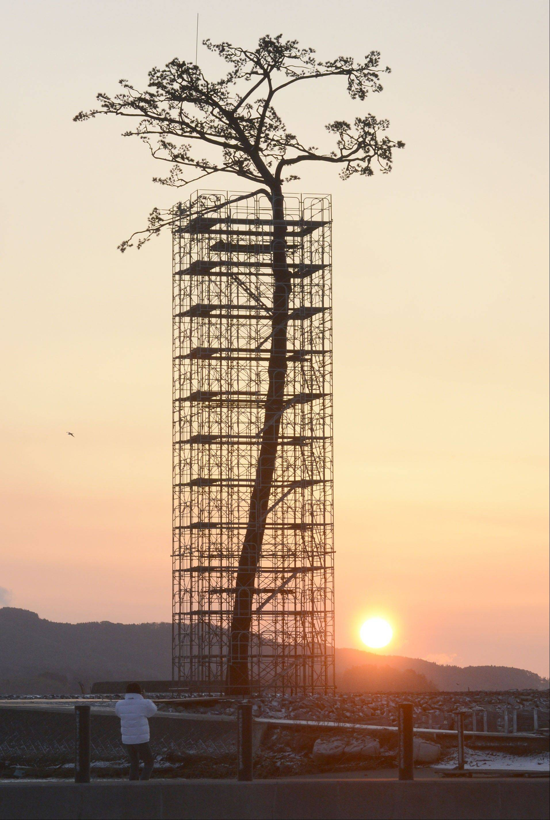 "An artificially-restored ""miracle pine tree,"" that survived the March 11, 2011 tsunami, is silhouetted against the rising sun in Rikuzentakata, Iwate prefecture, Japan, Monday, March 11, 2013. Japan marked the second anniversary of its earthquake, tsunami and nuclear catastrophe, that killed nearly 19, 000 people in areas along Japan's northeastern coast. The 27-meter (88-foot and 7-inch)-tall tree, a single survivor among 70,000 trees in a forest along the coast, has just been restored in a project to preserve it."