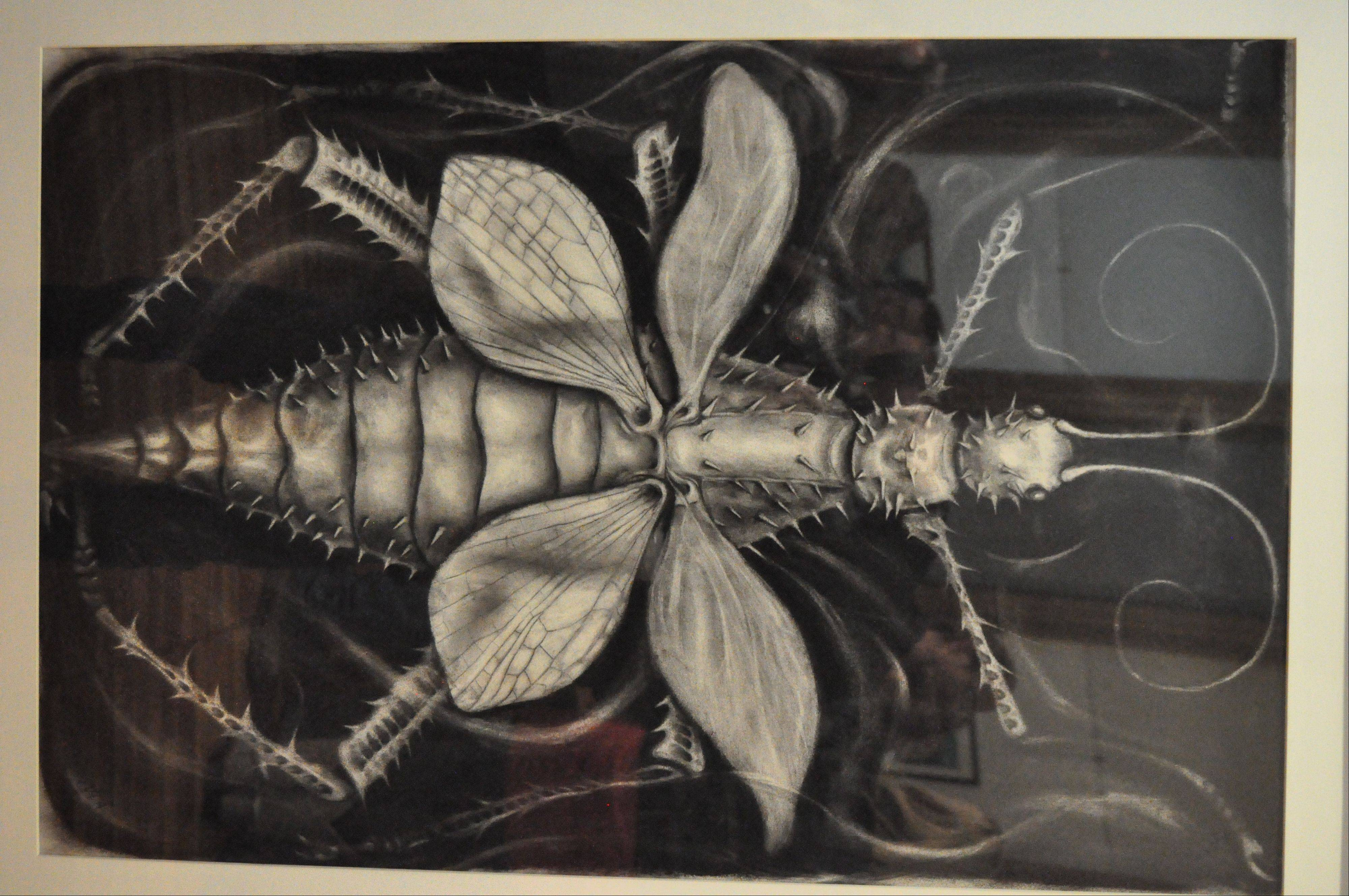 "Titled ""The Insect,"" this charcoal drawing is Rob Sula's rendering of a green nymph stick."