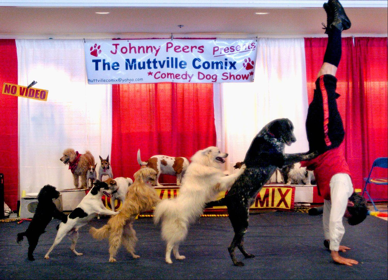 The Pet Expo always has a couple amazing animal acts -- last year it was the Johnny Peers and his Muttville Comix Comedy Dog Show, here forming a conga line.