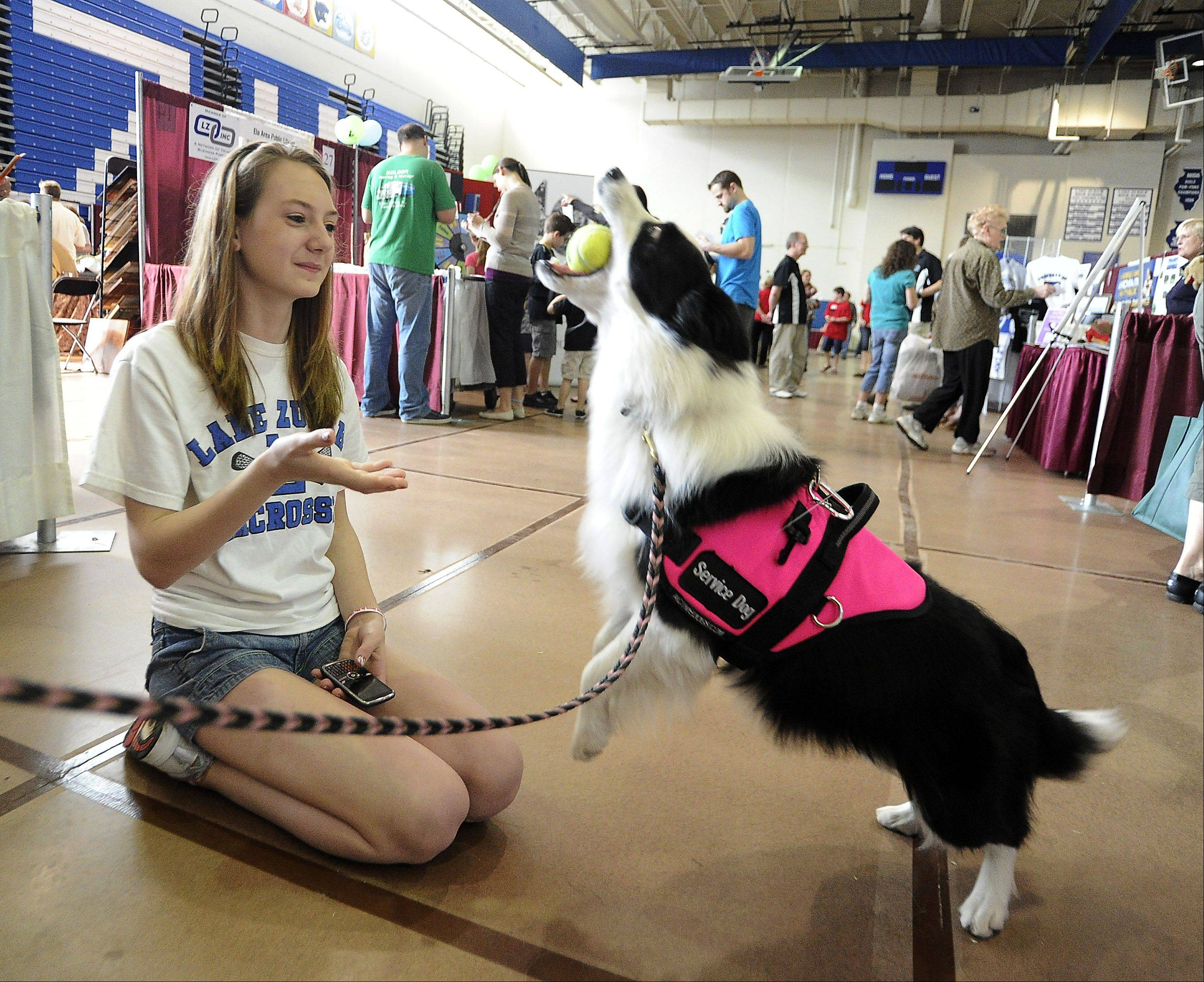 Emily Gillespie, 14, of Lake Zurich plays with service dog Ameya the border collie from the Oakview Pet Resort of Wauconda at the Lake Zurich Chamber business expo last year.