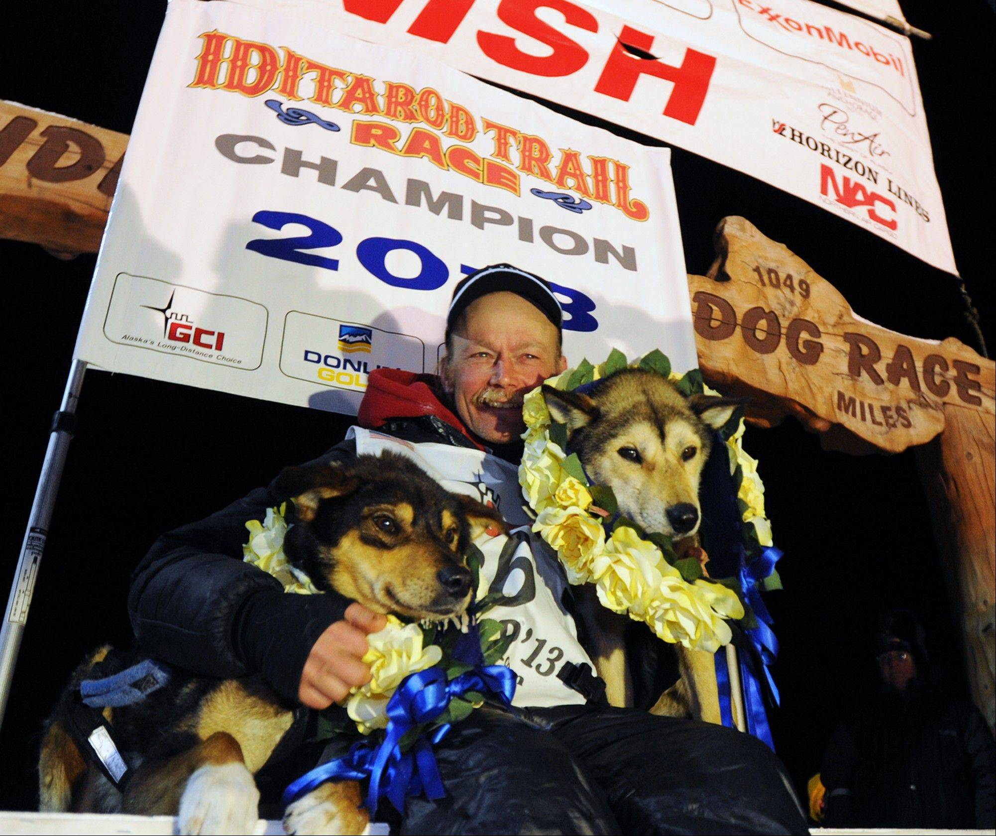 Mitch Seavey became the oldest winner and a two-time Iditarod champion when he drove his dog team under the burled arch in Nome on Tuesday evening, March 12, 2013. He sits with his two lead dogs, Tanner, left and Taurus, right.